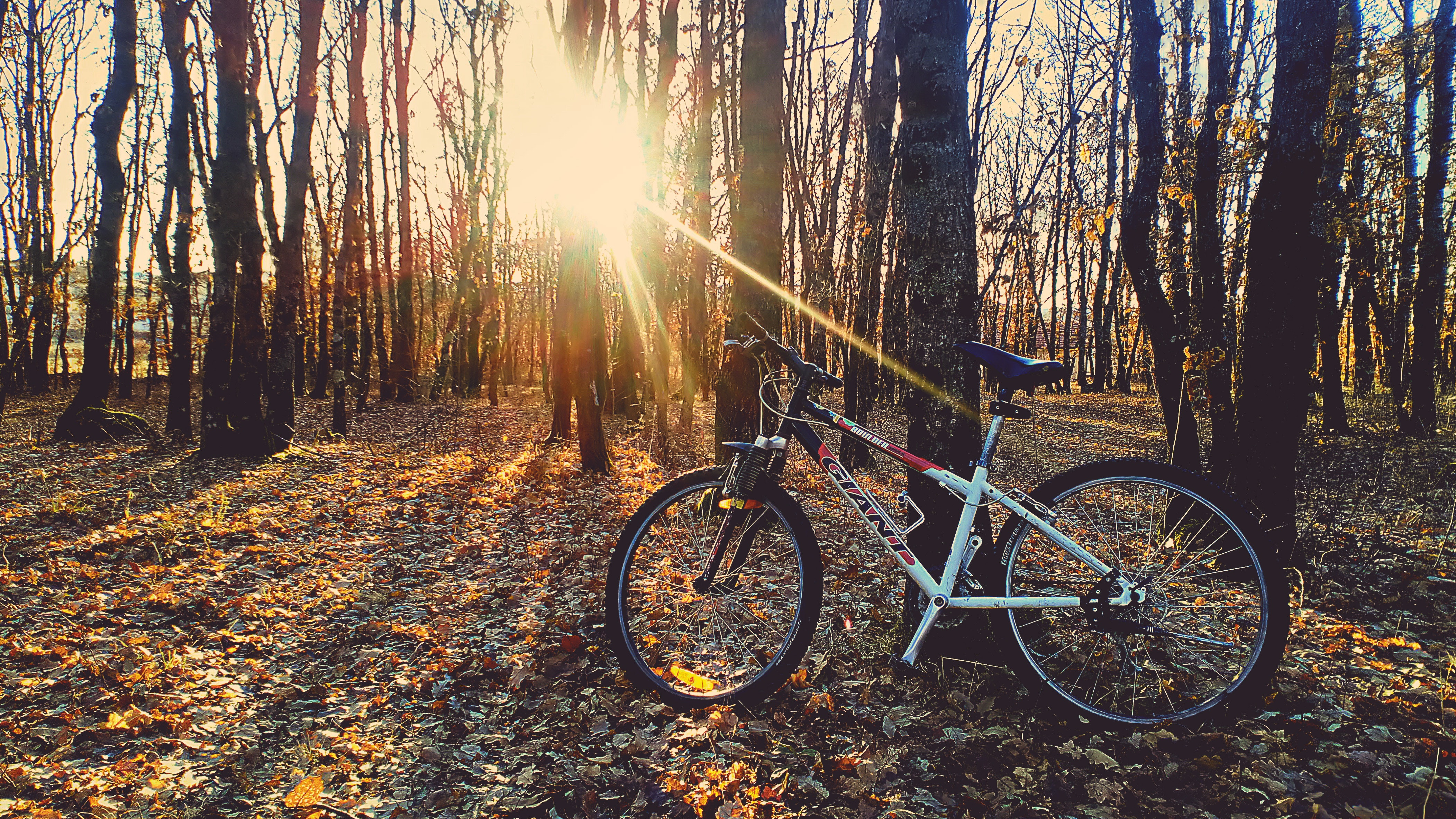 Red and White Hardtail Bike, Bicycle, Outdoors, Wheels, Trees, HQ Photo