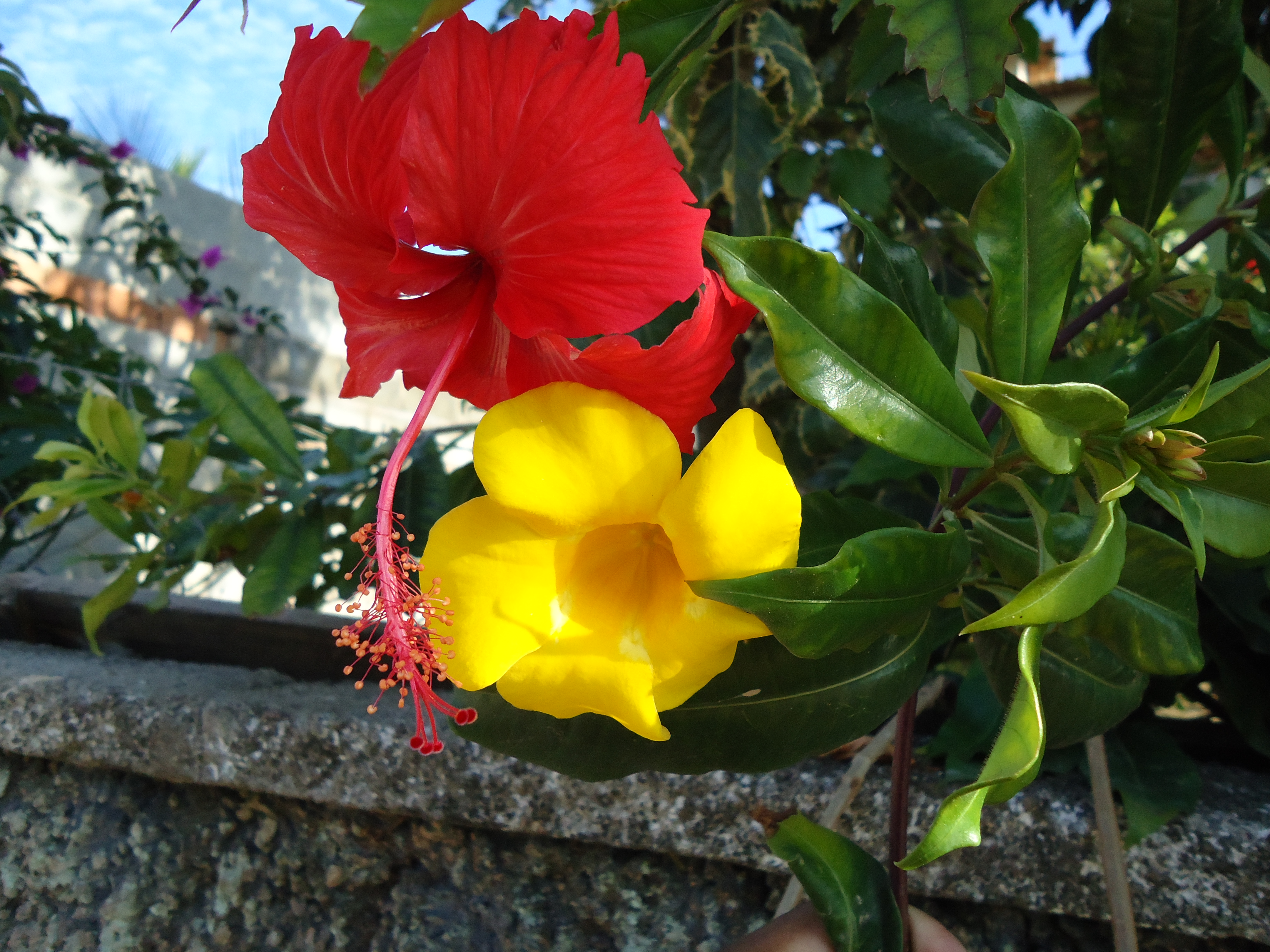 Free Photo Red And Yellow Flowers Red Yellow Petals Non