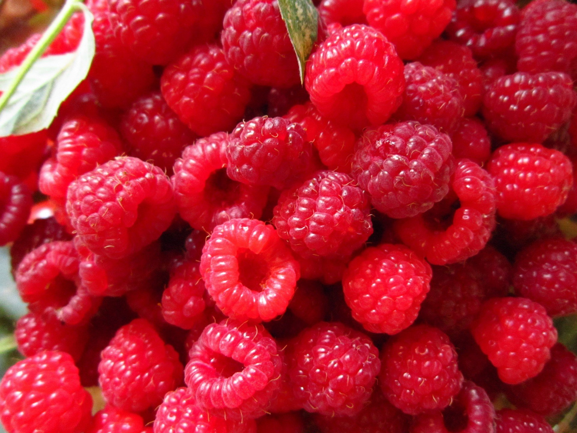 Gallery – Red Berry Factory