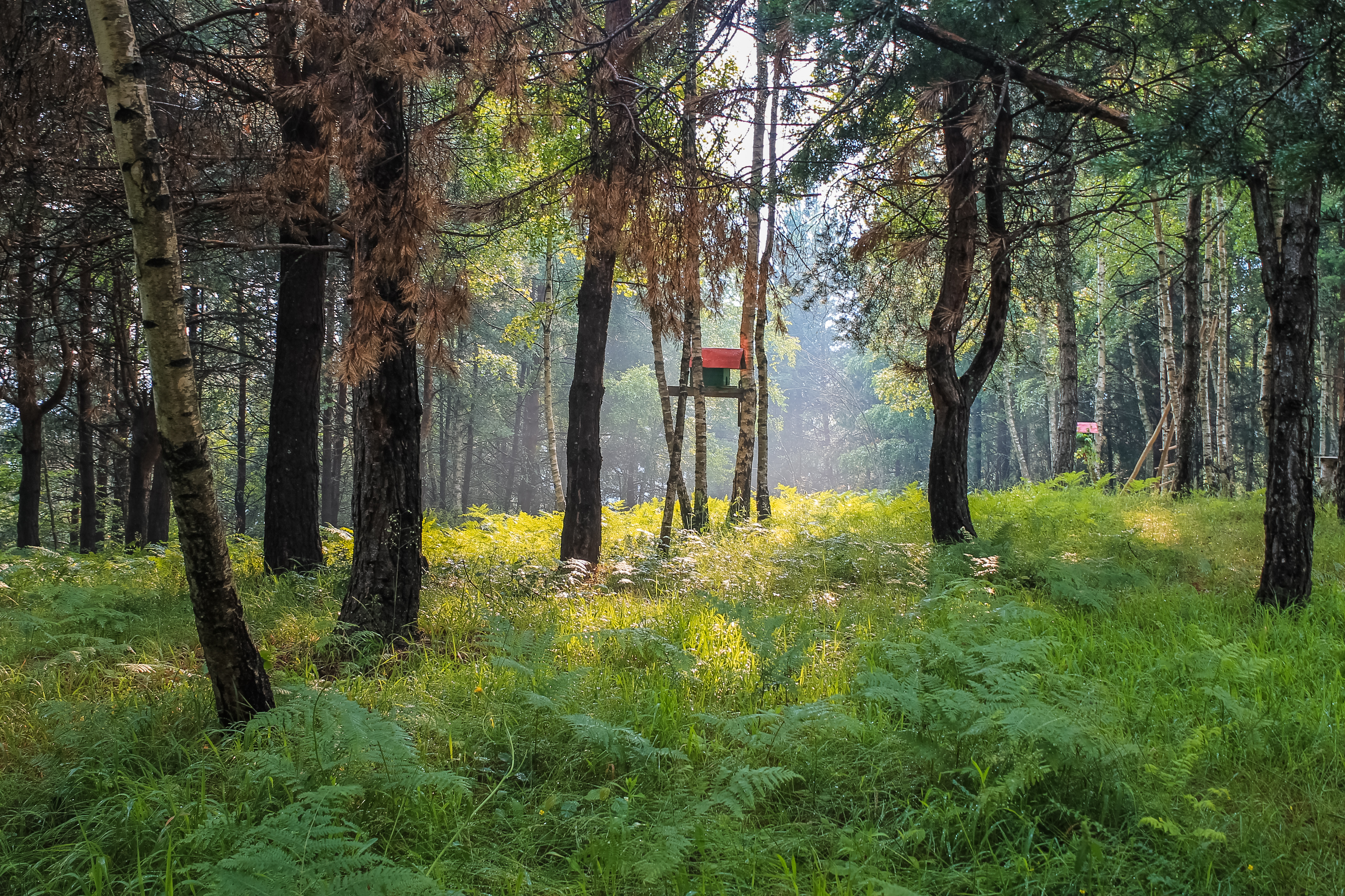 Red birdhouse in foggy, summer forest, plants, nature, scene, scenery, HQ Photo
