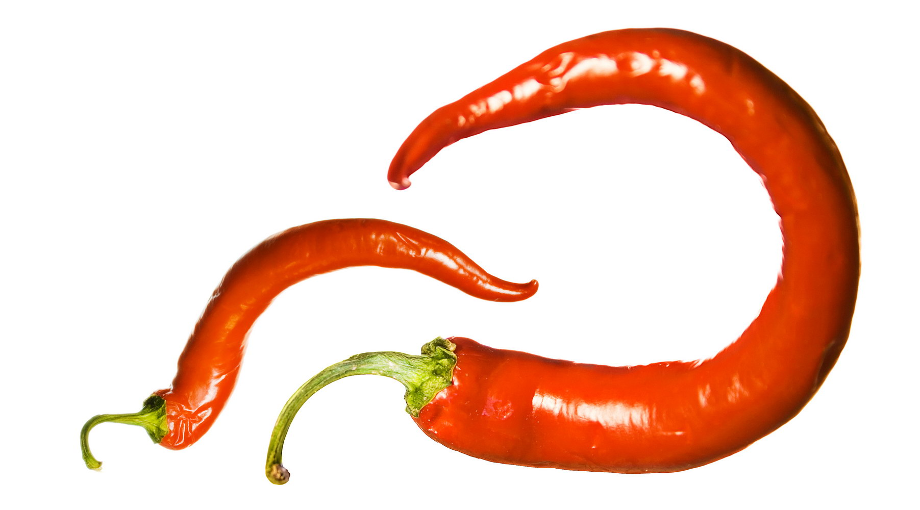 Red chilli pepper photo