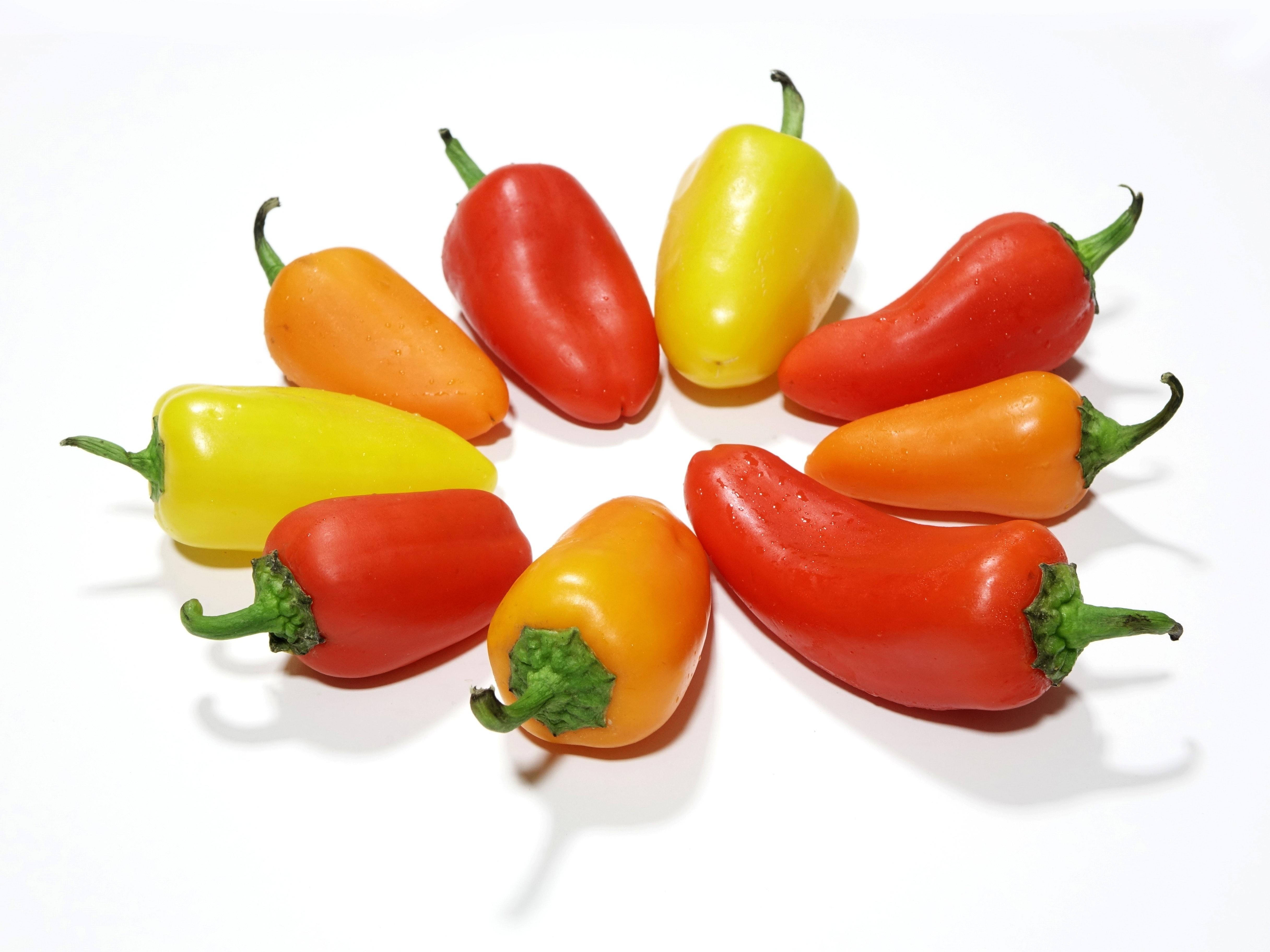 Red chilli pepper photo