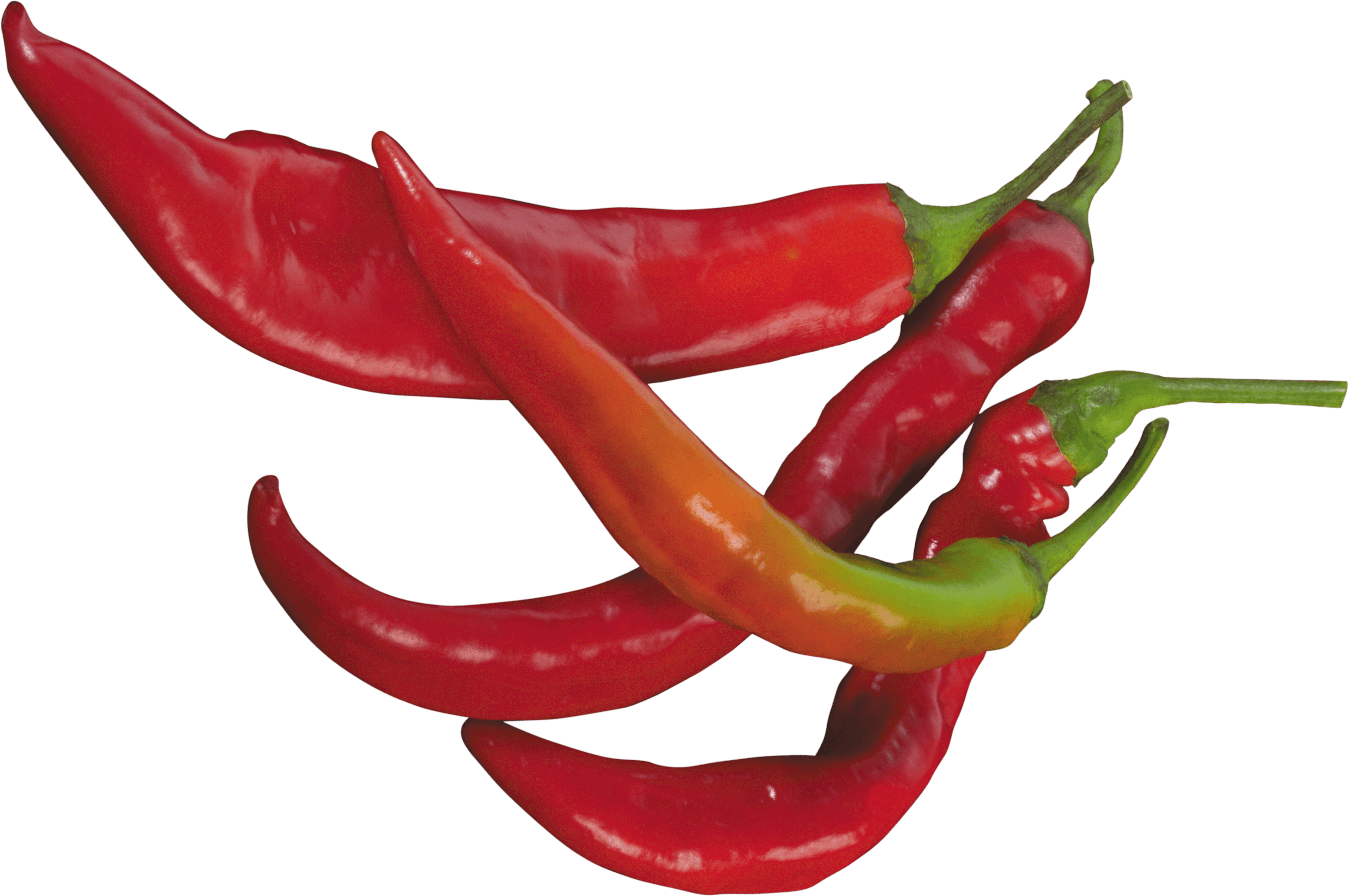 Red Chilli Pepper transparent PNG - StickPNG