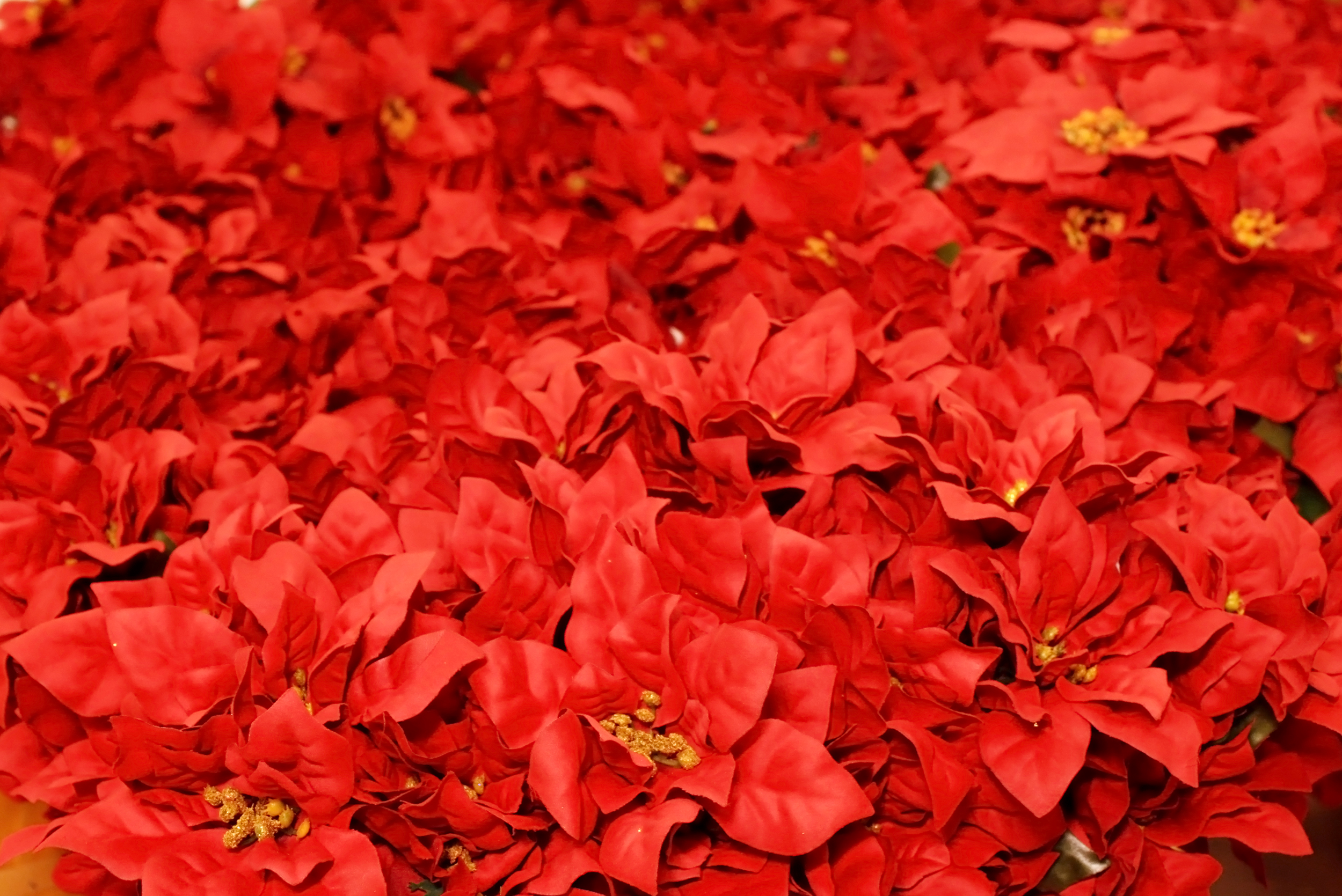 Red Christmas background, Artificial, Petals, Growth, Holiday, HQ Photo