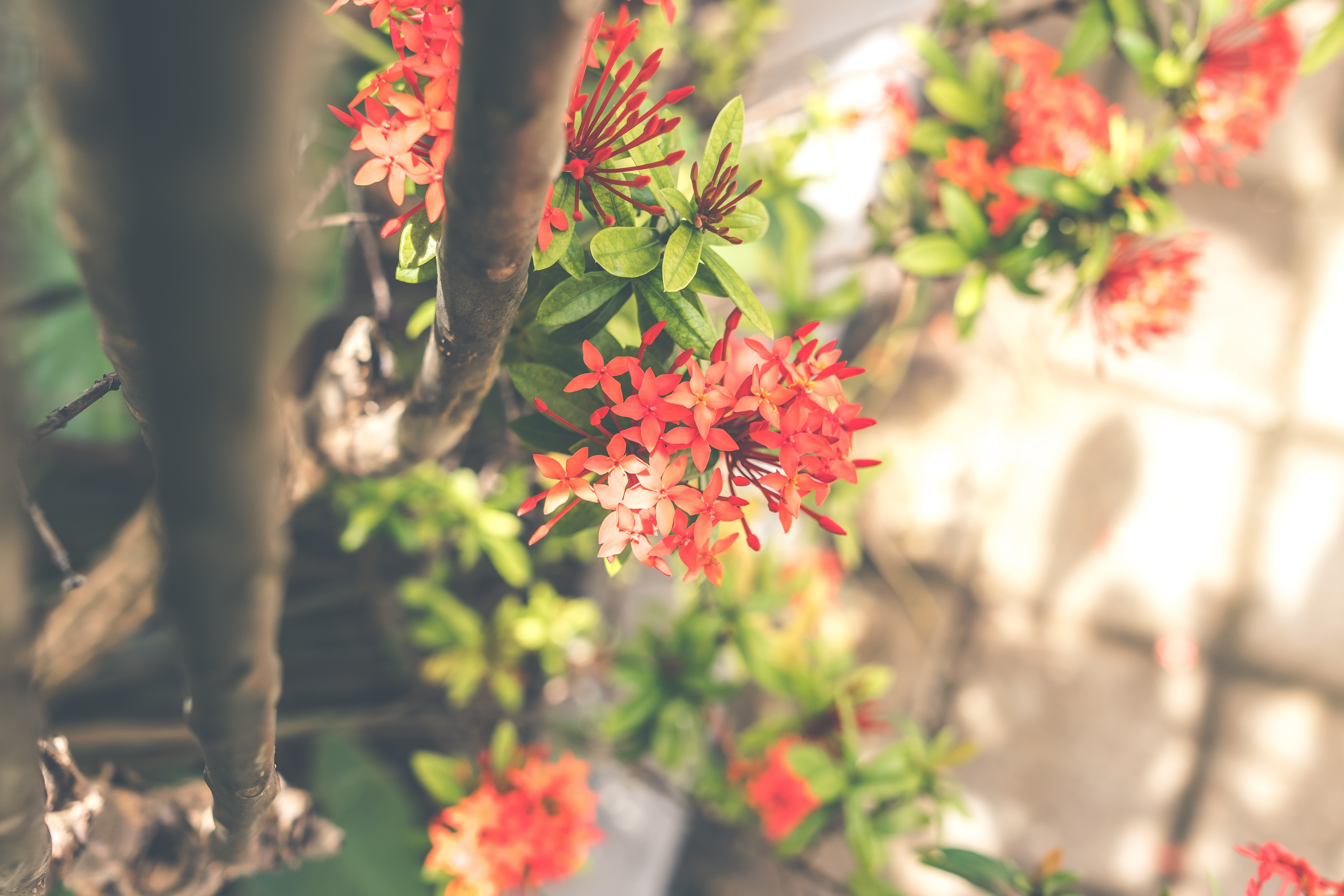 Red cluster flowers photo