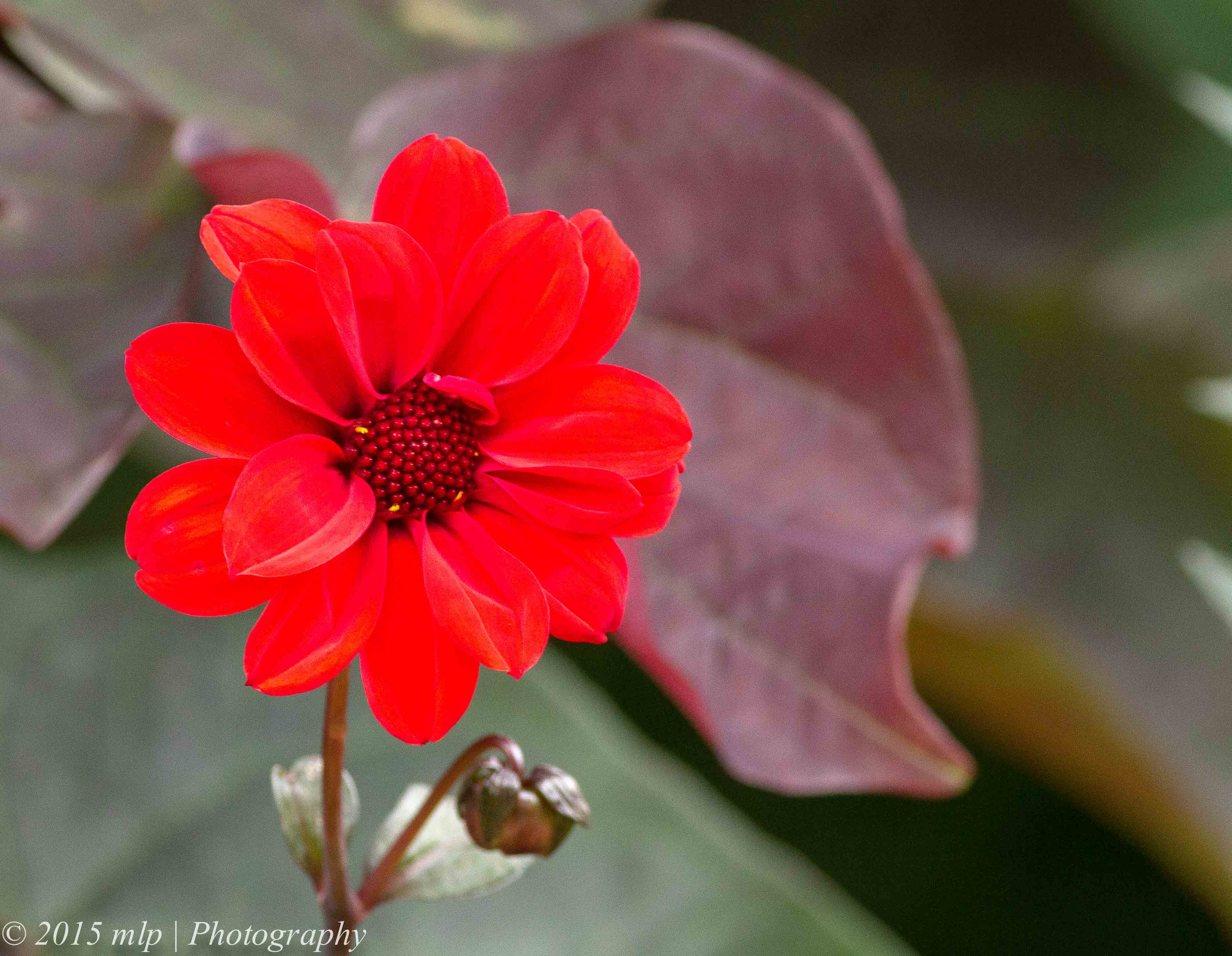 Flowers | The Gap Year and Beyond