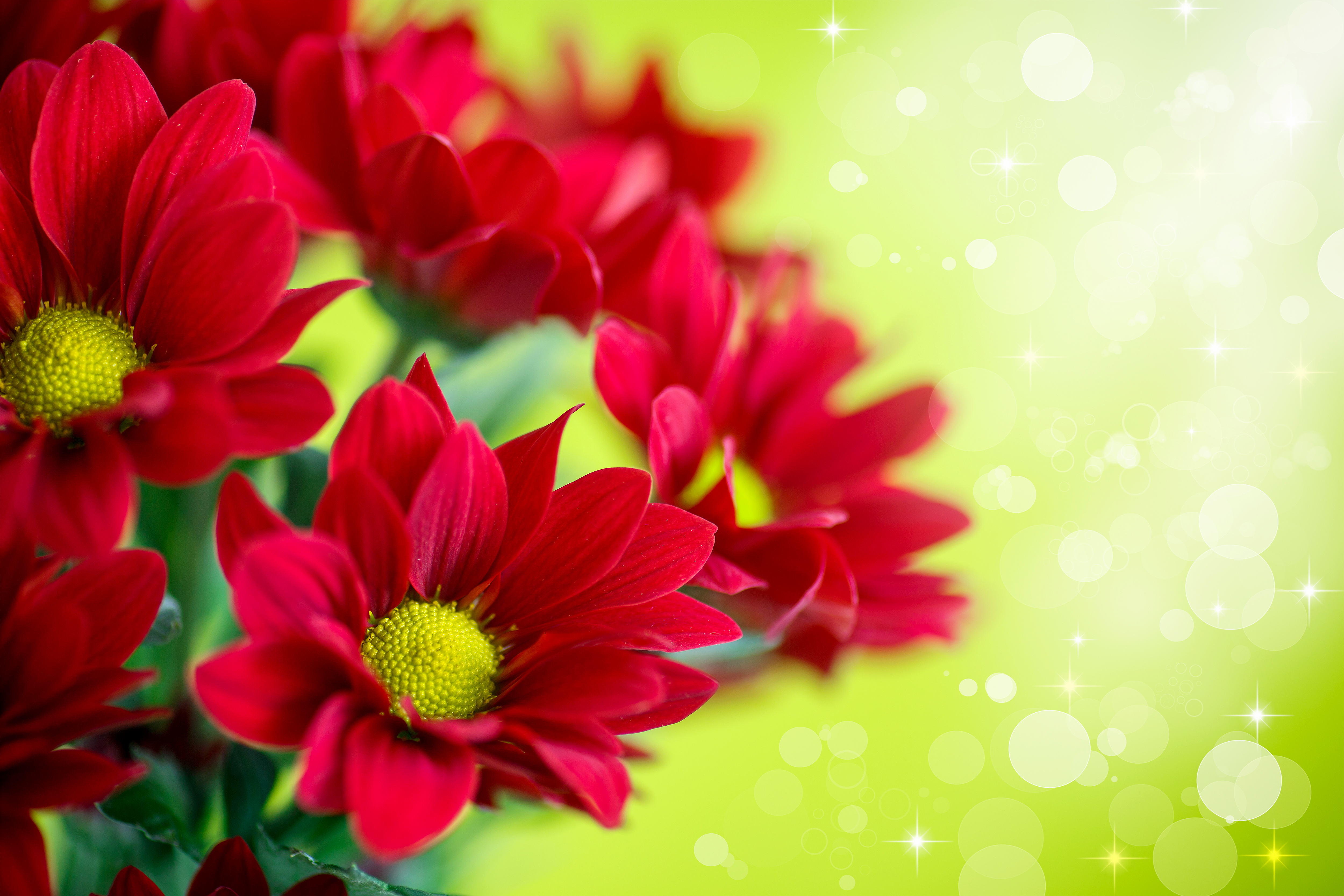 Beautiful Red Flowers Background | Gallery Yopriceville - High ...