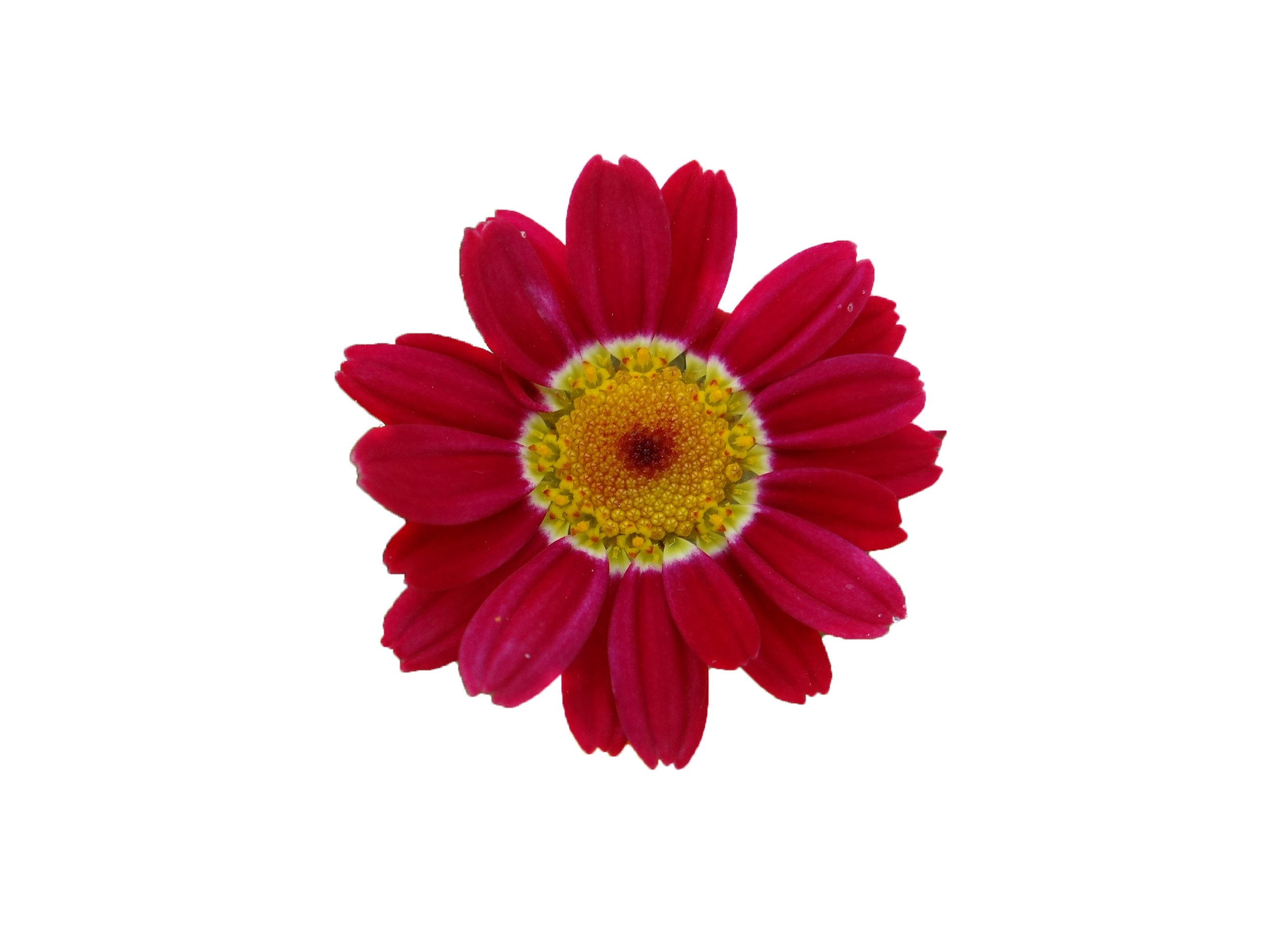 Red flower, Flower, Nature, Red, HQ Photo