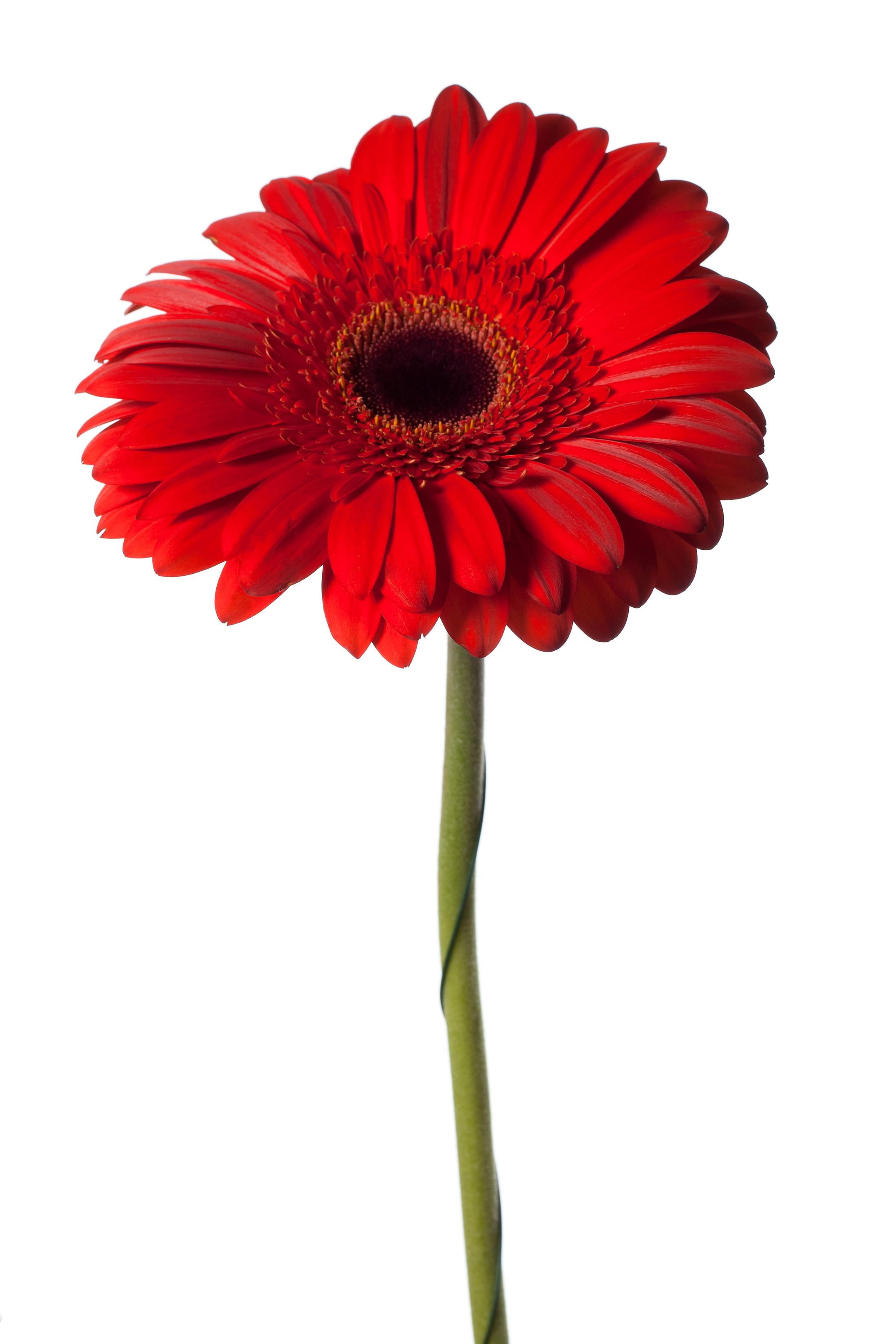 Free Photo Red Flower Plant Petal Spring Free Download Jooinn