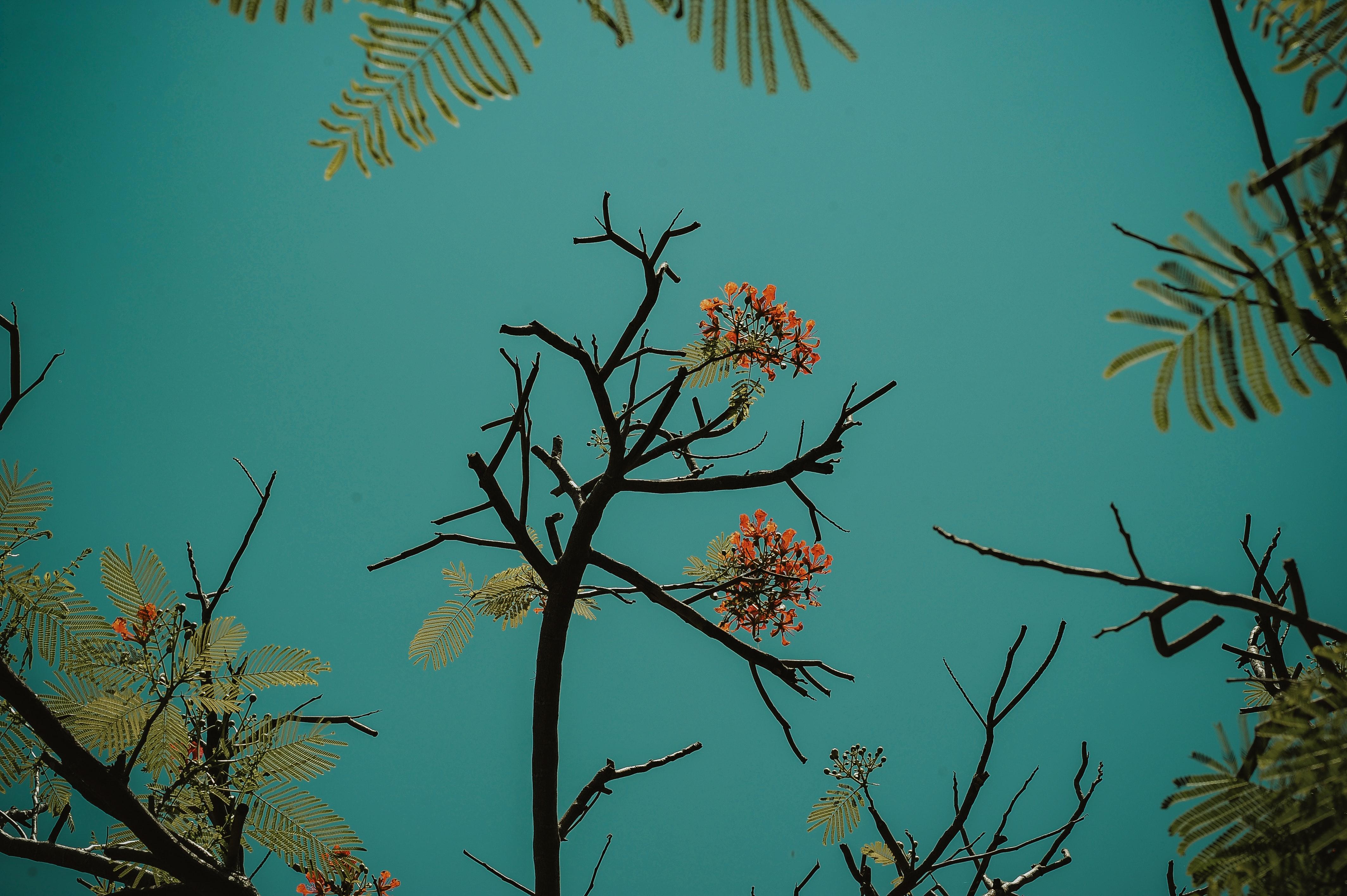Red flowering tree photo