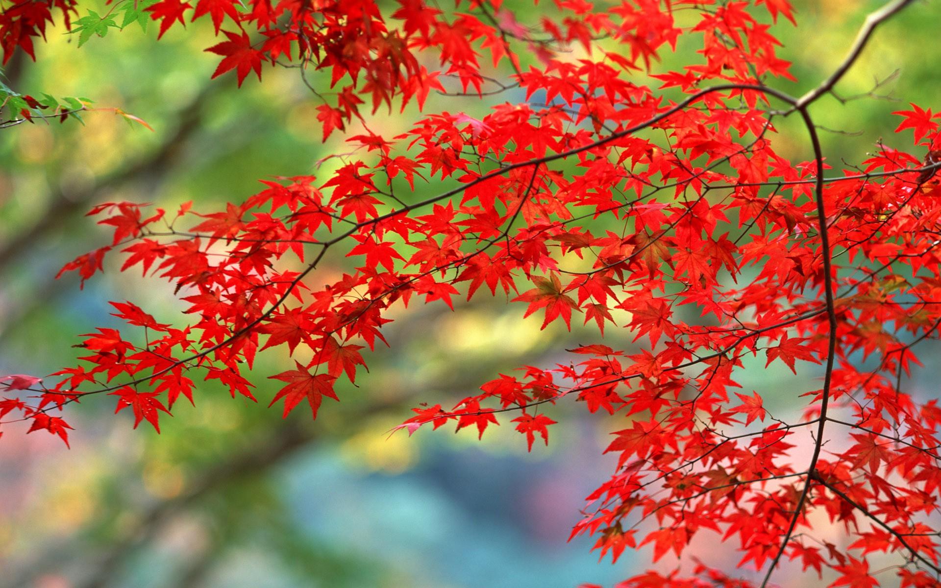 Red tree flower wallpaper #42189 - Open Walls