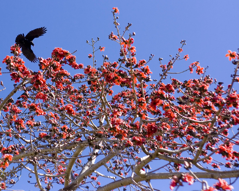 red flowering tree | Art Stuff by K
