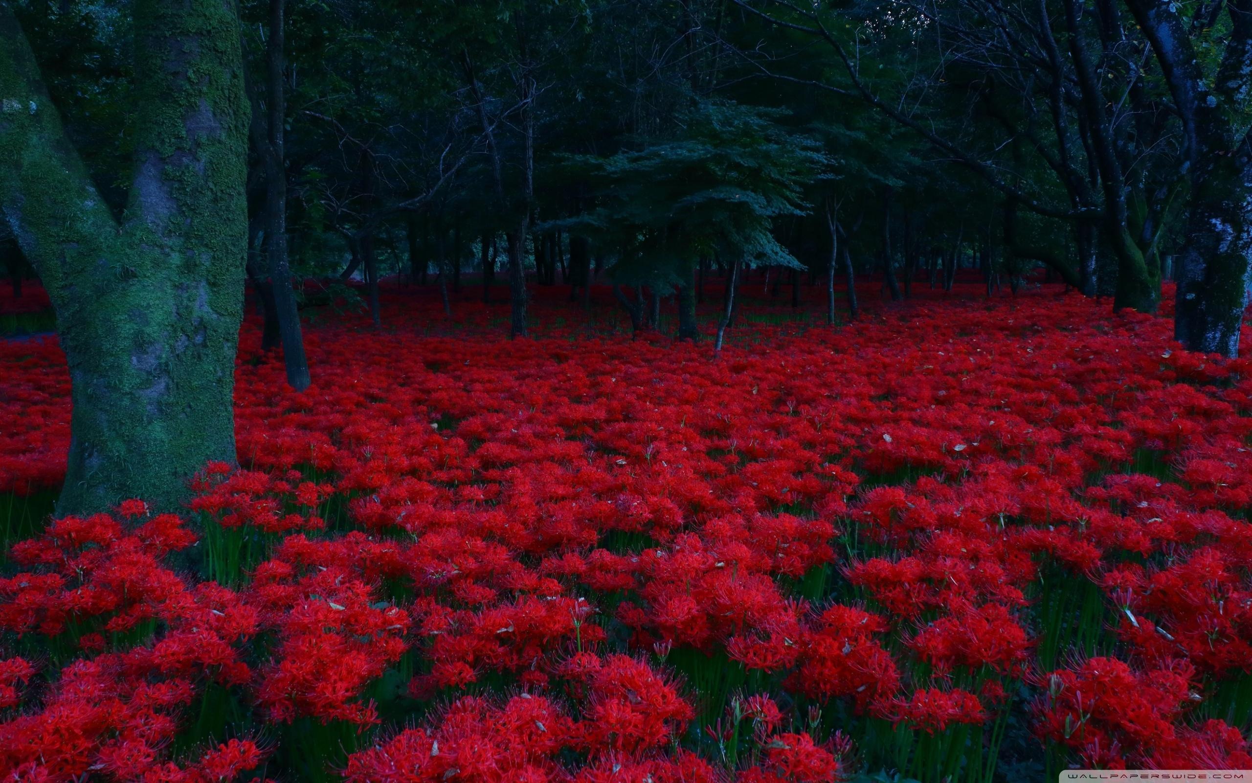 Red Flowers, Forest ❤ 4K HD Desktop Wallpaper for 4K Ultra HD TV ...