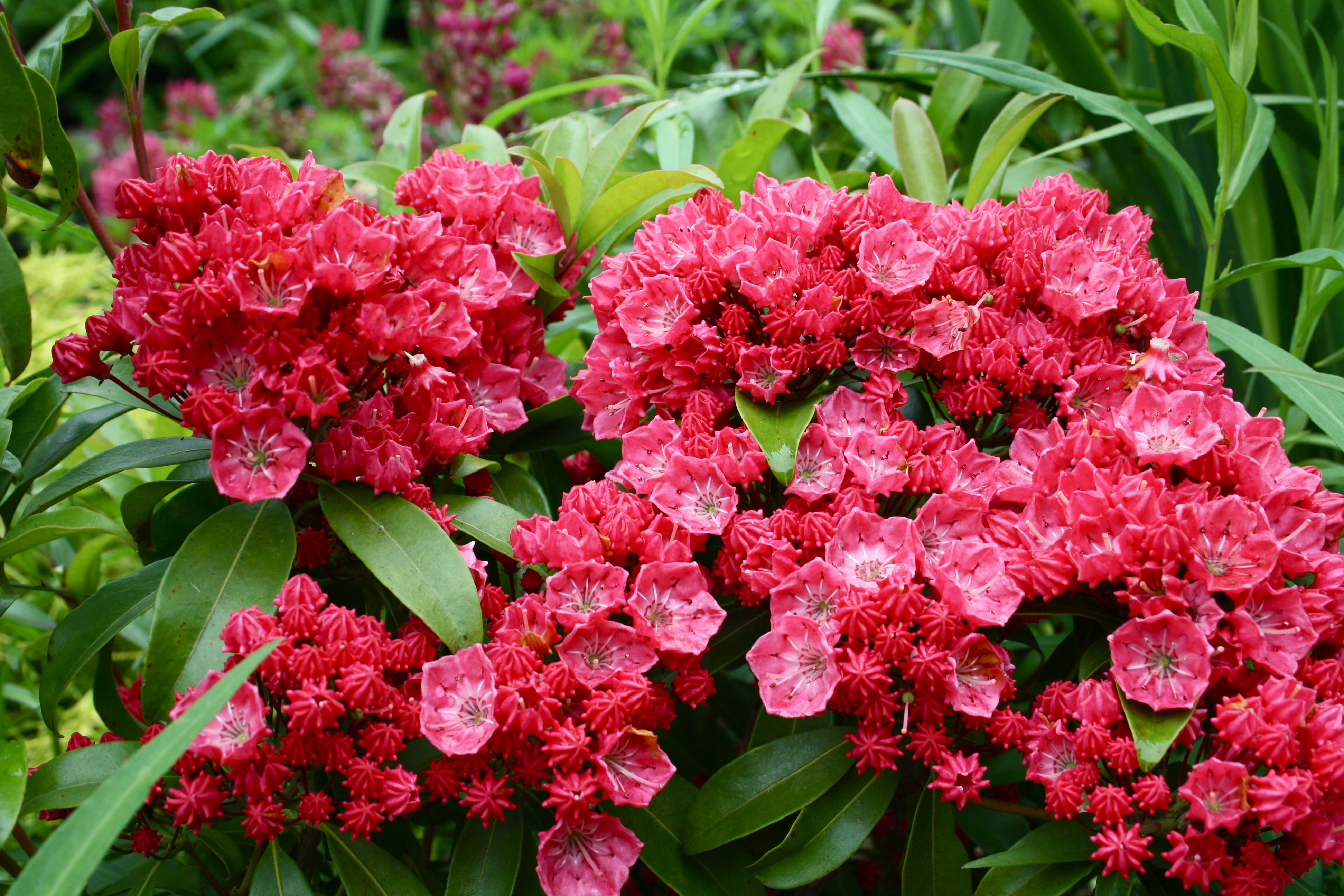 Red Flowers, Bloom, Flowers, Garden, Plant, HQ Photo