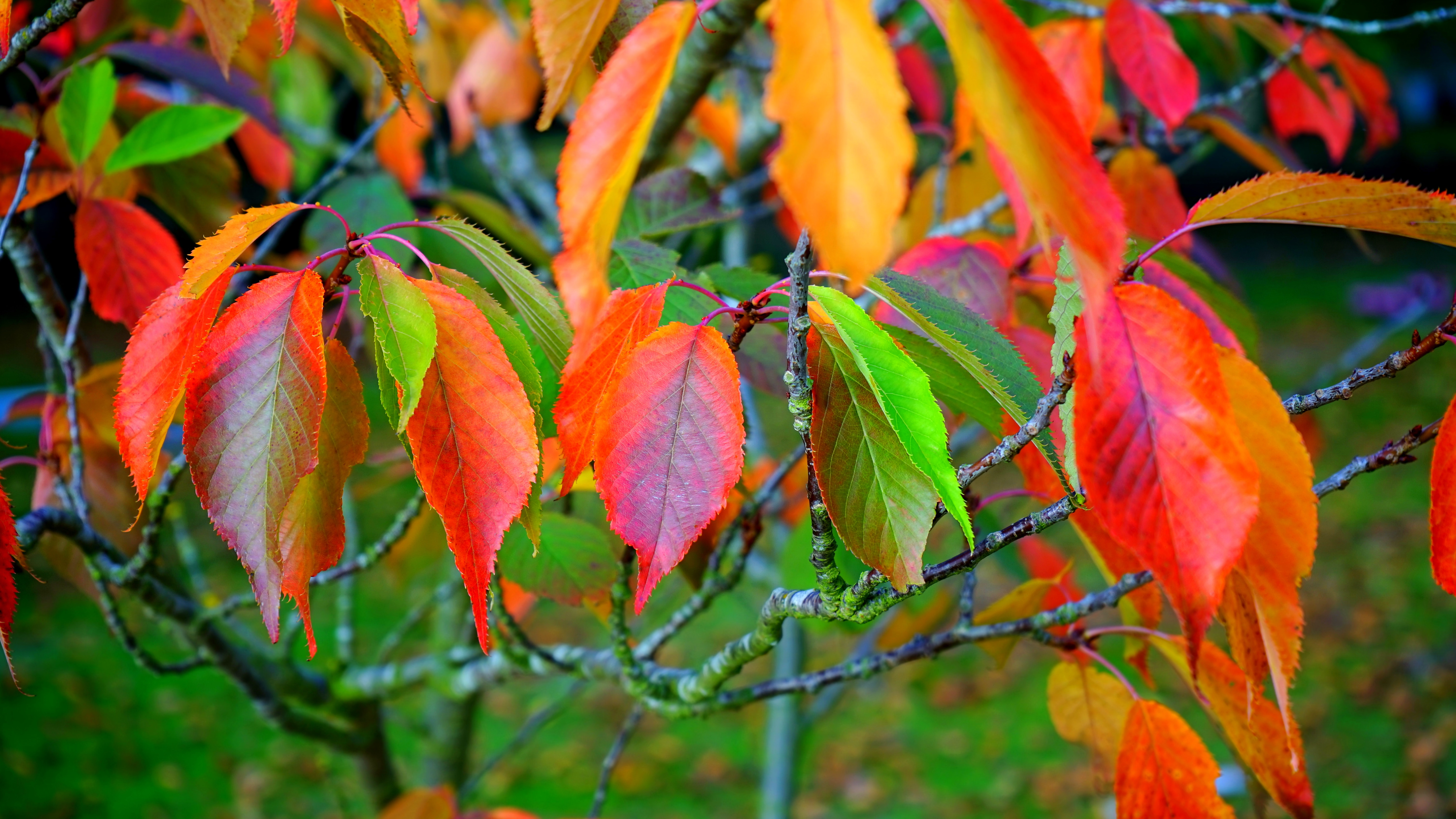 Red green and orange leaves photo