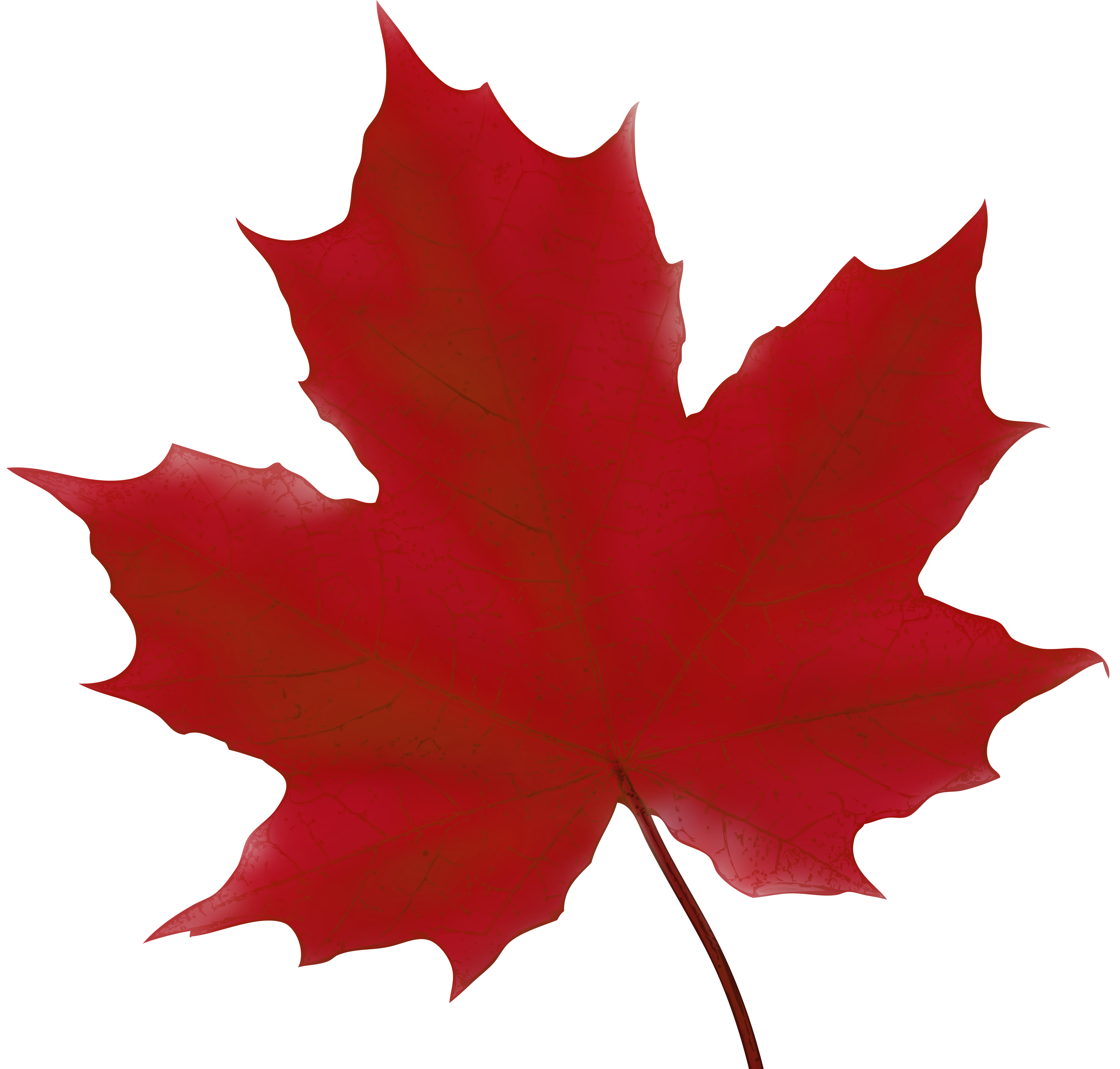 Maple Leaf Red PNG Clip Art Image | Gallery Yopriceville - High ...