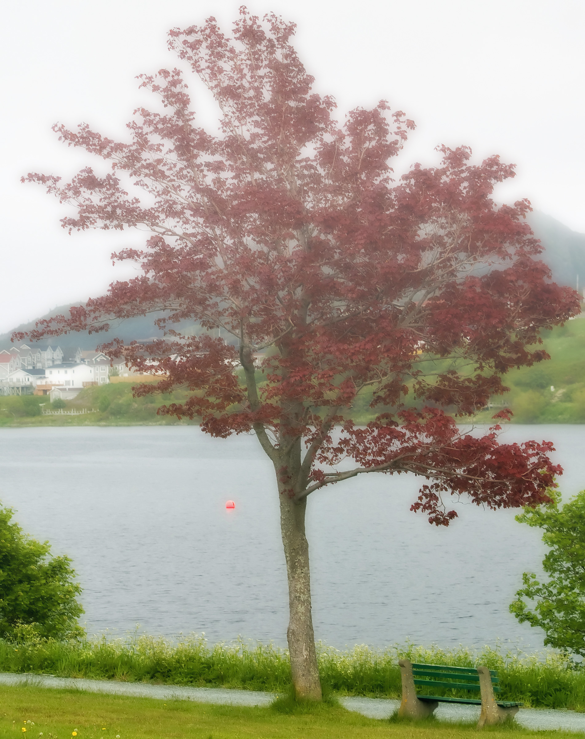 Red Maple, Beauty, Walk, Tree, Trail, HQ Photo