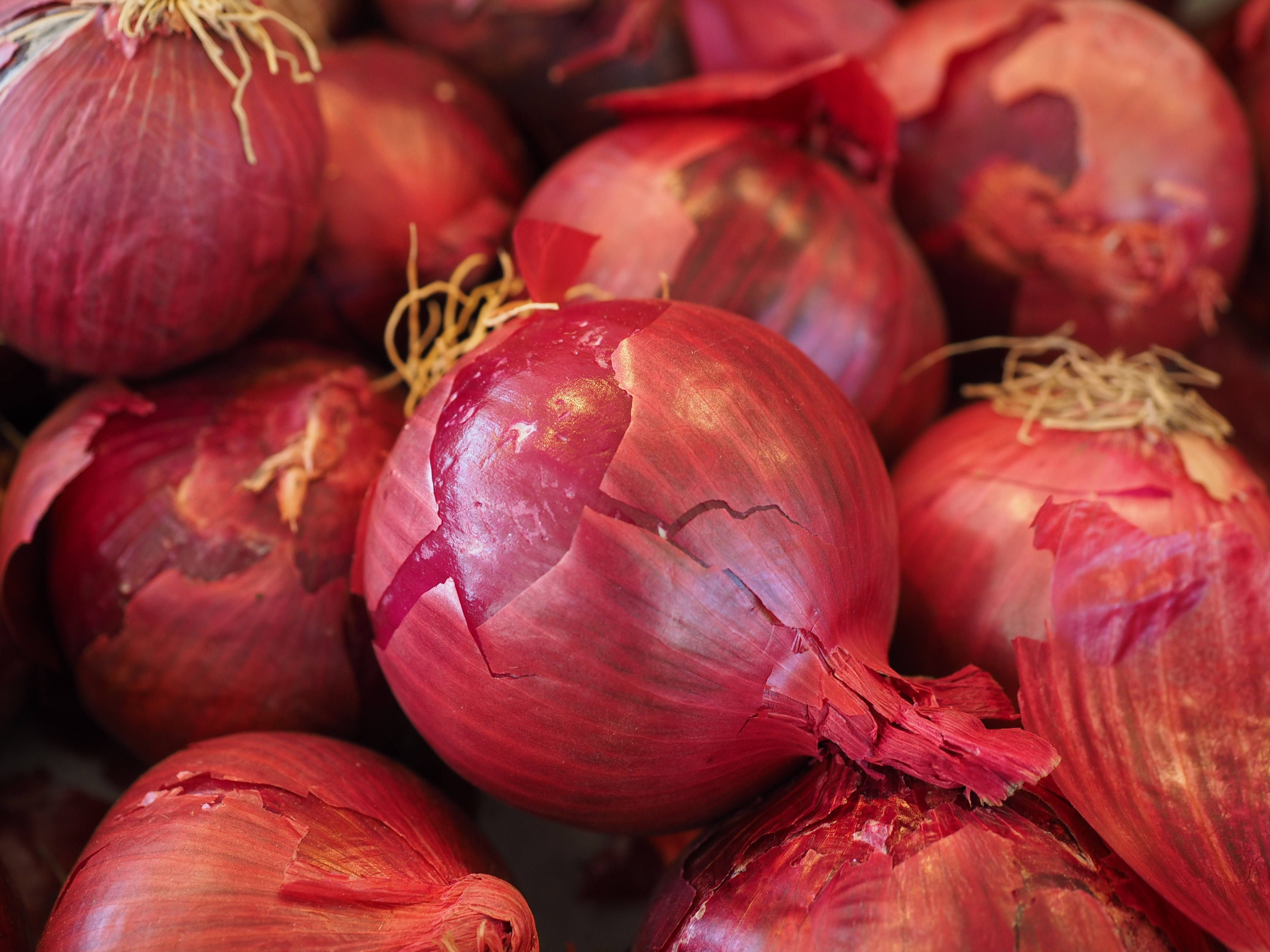 Red onions photo