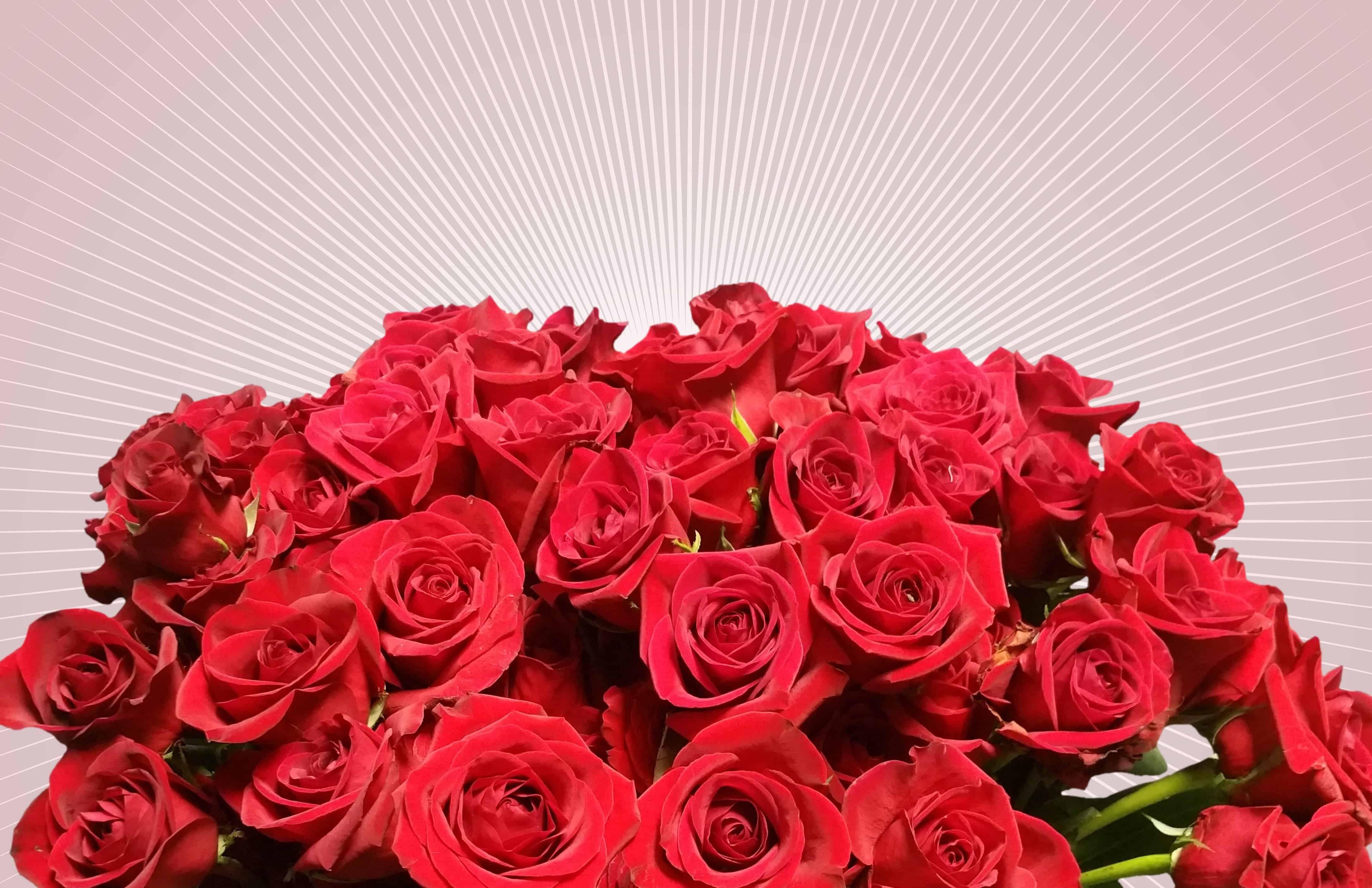 Free picture: bouquet, red flower, petal, rose, petals, blossom ...