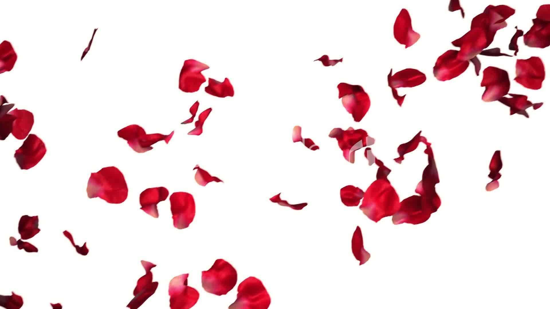 Red Falling Petals Pictures | Jacob Artsy | Pinterest | Artsy and ...