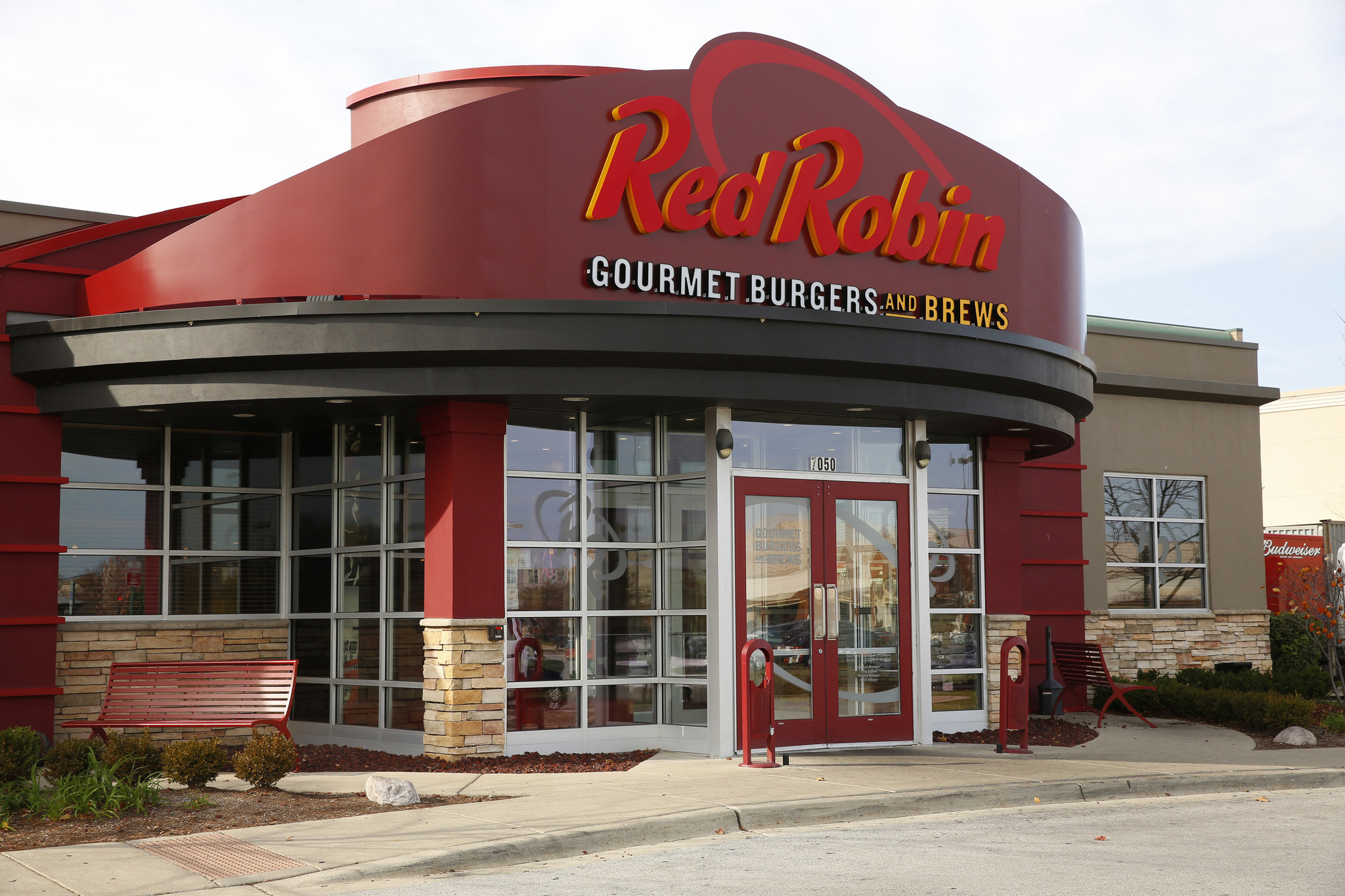 Red robin photo