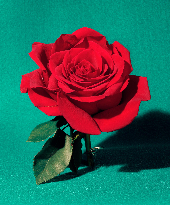Sara Cwynar   Red Rose   Art Basel