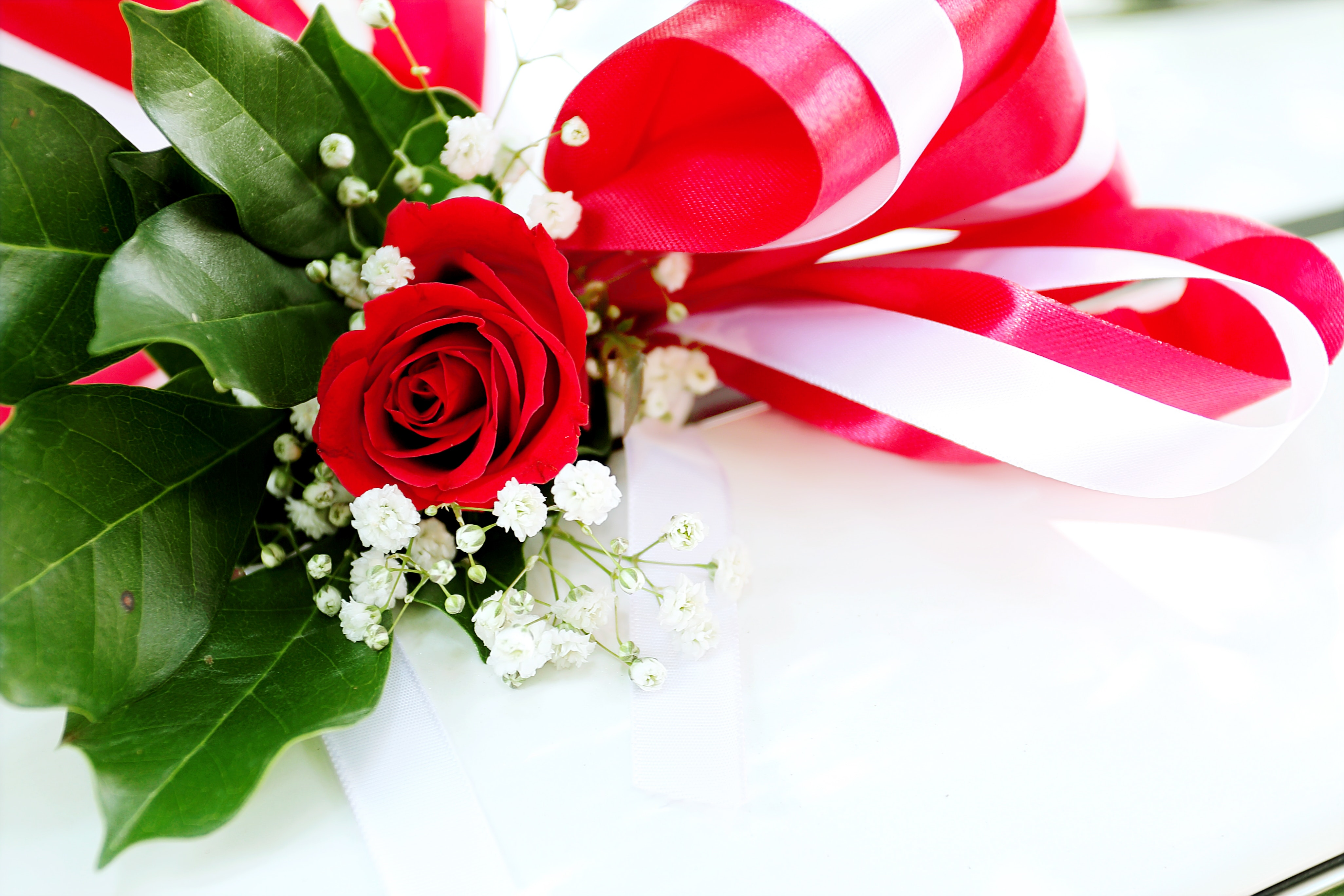 Free Photo Red Rose Flower On White Surface Petals Marriage