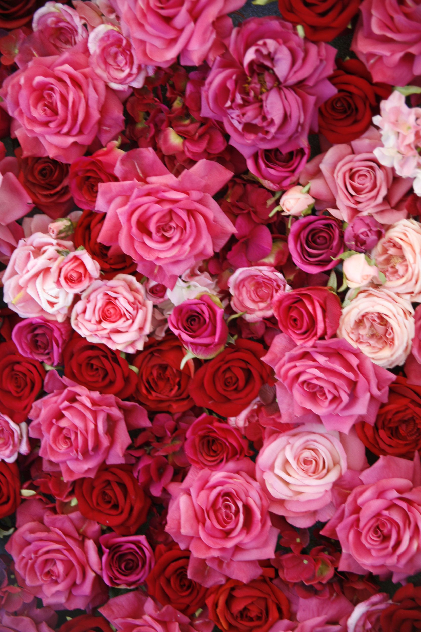 Free Photo Red Roses Red Roses Pretty Free Download Jooinn