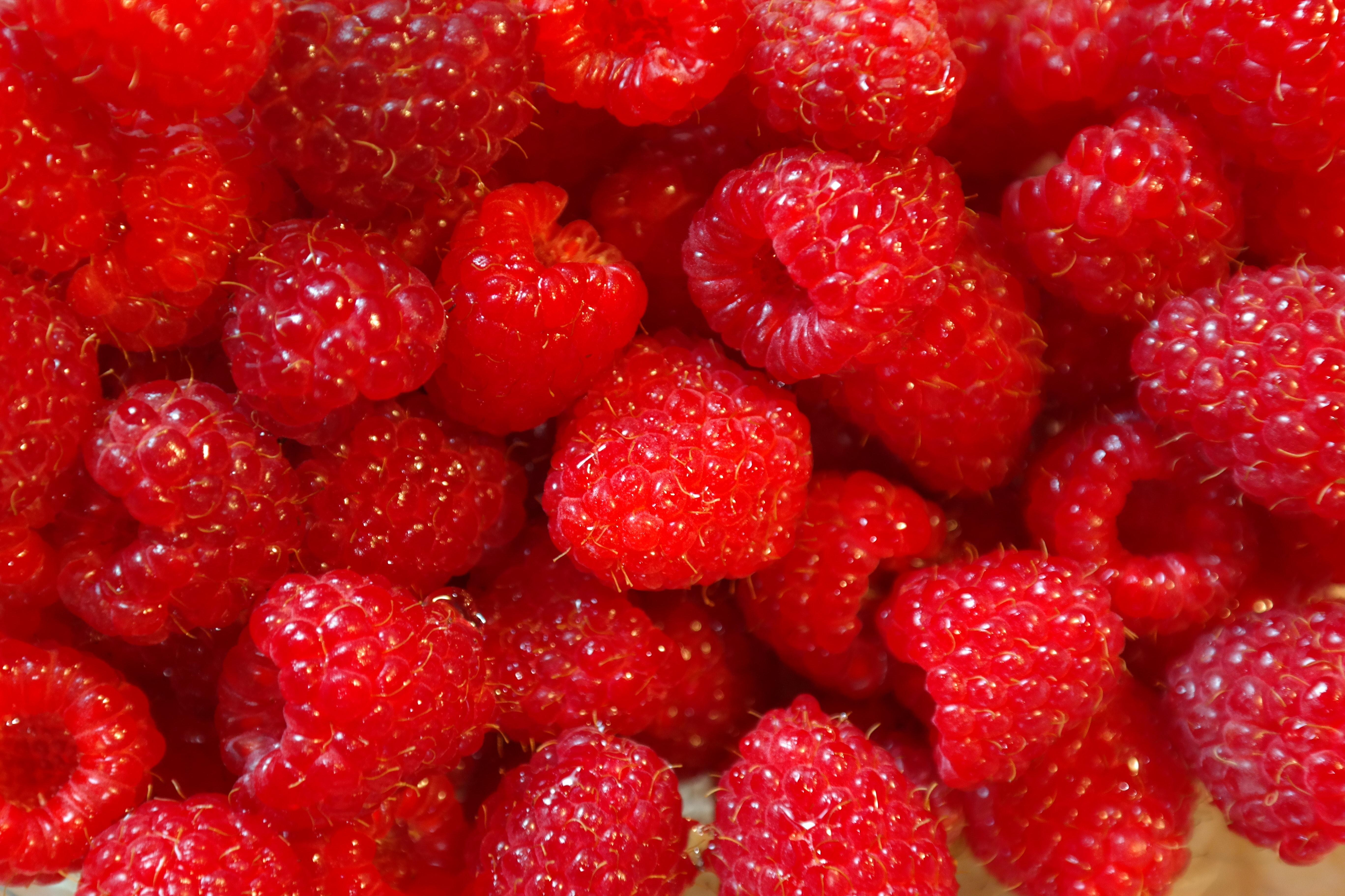 Red strawberry photo