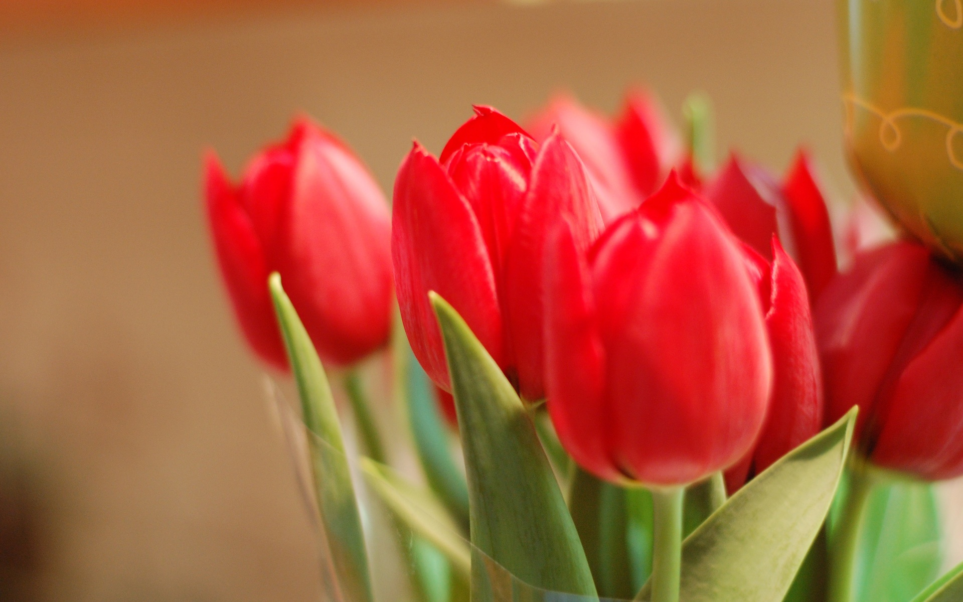 Bouquet red tulip flowers close-up wallpaper | flowers | Wallpaper ...