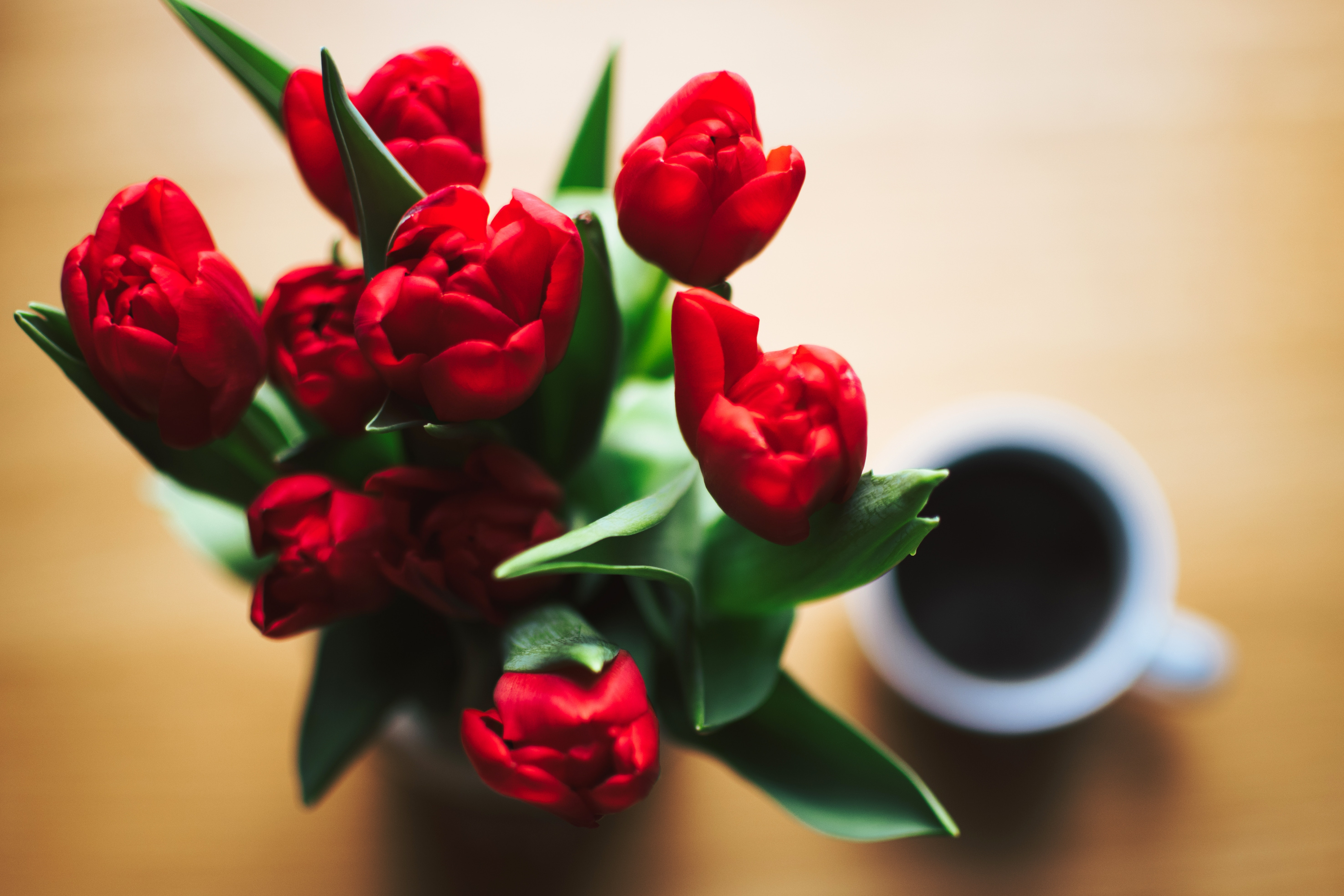 Red Tulip Bouquet Beside White Ceramic Cup Full of Black Liquid, Colors, Tulips, Top view, Table, HQ Photo