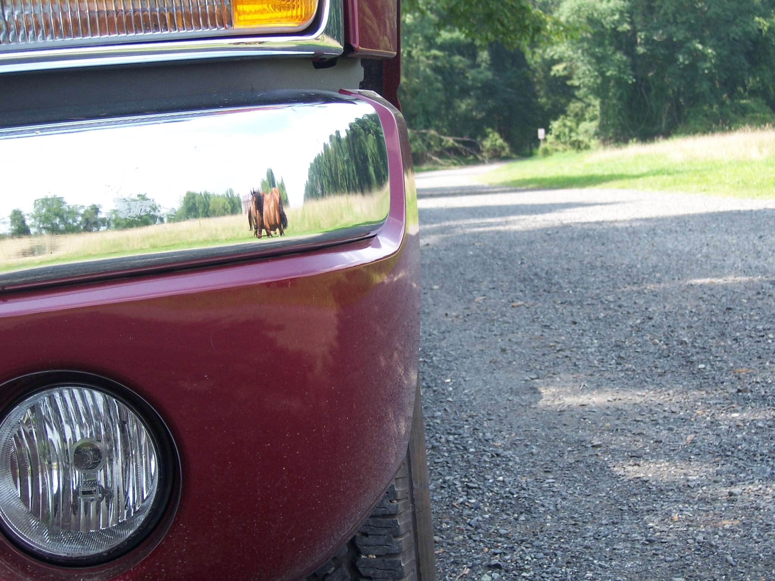 REFLECTION, Bspo06, Bumper, Car, Horse, HQ Photo