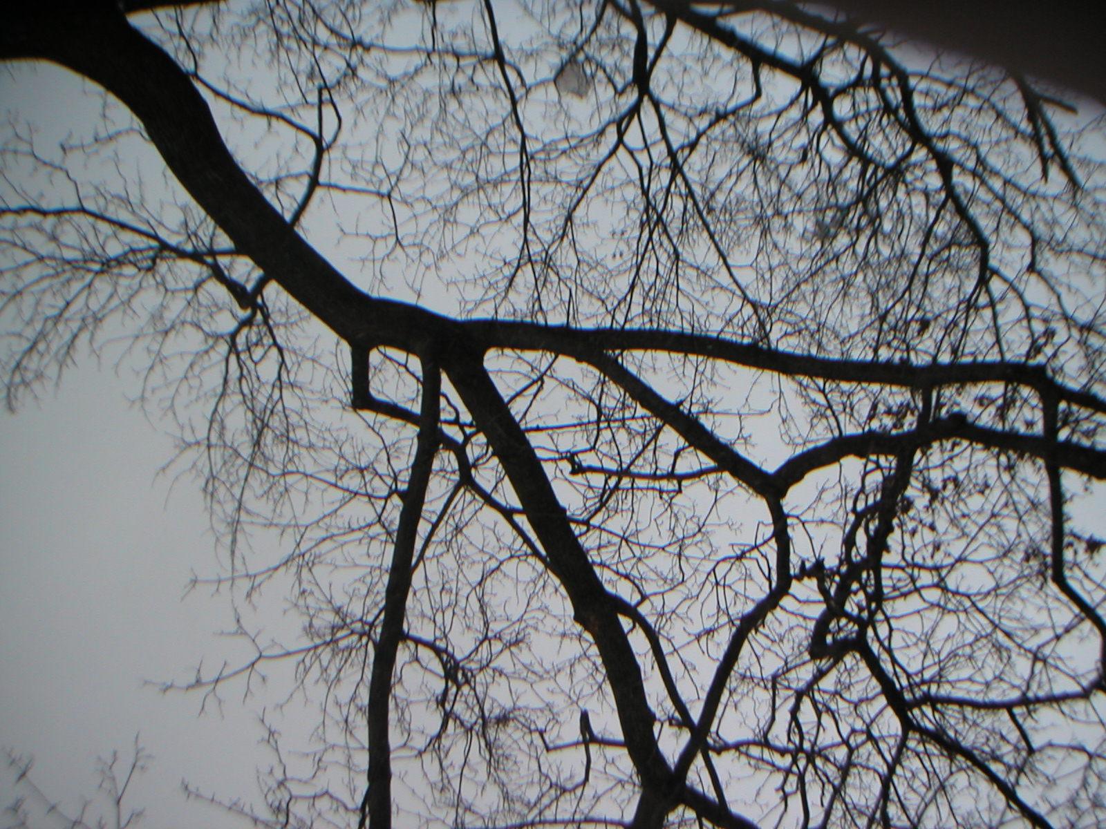 Regent park photo