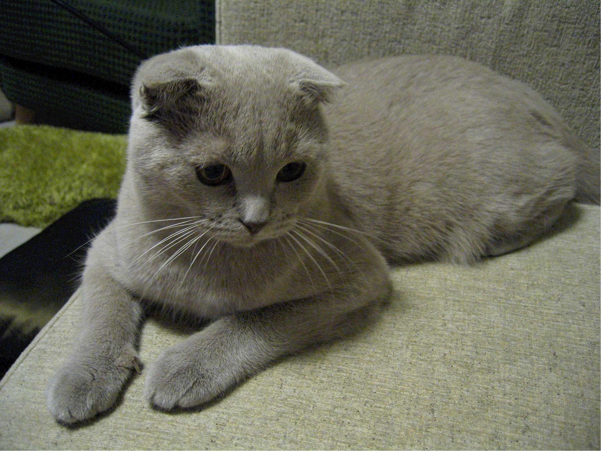 Relaxing cat photo