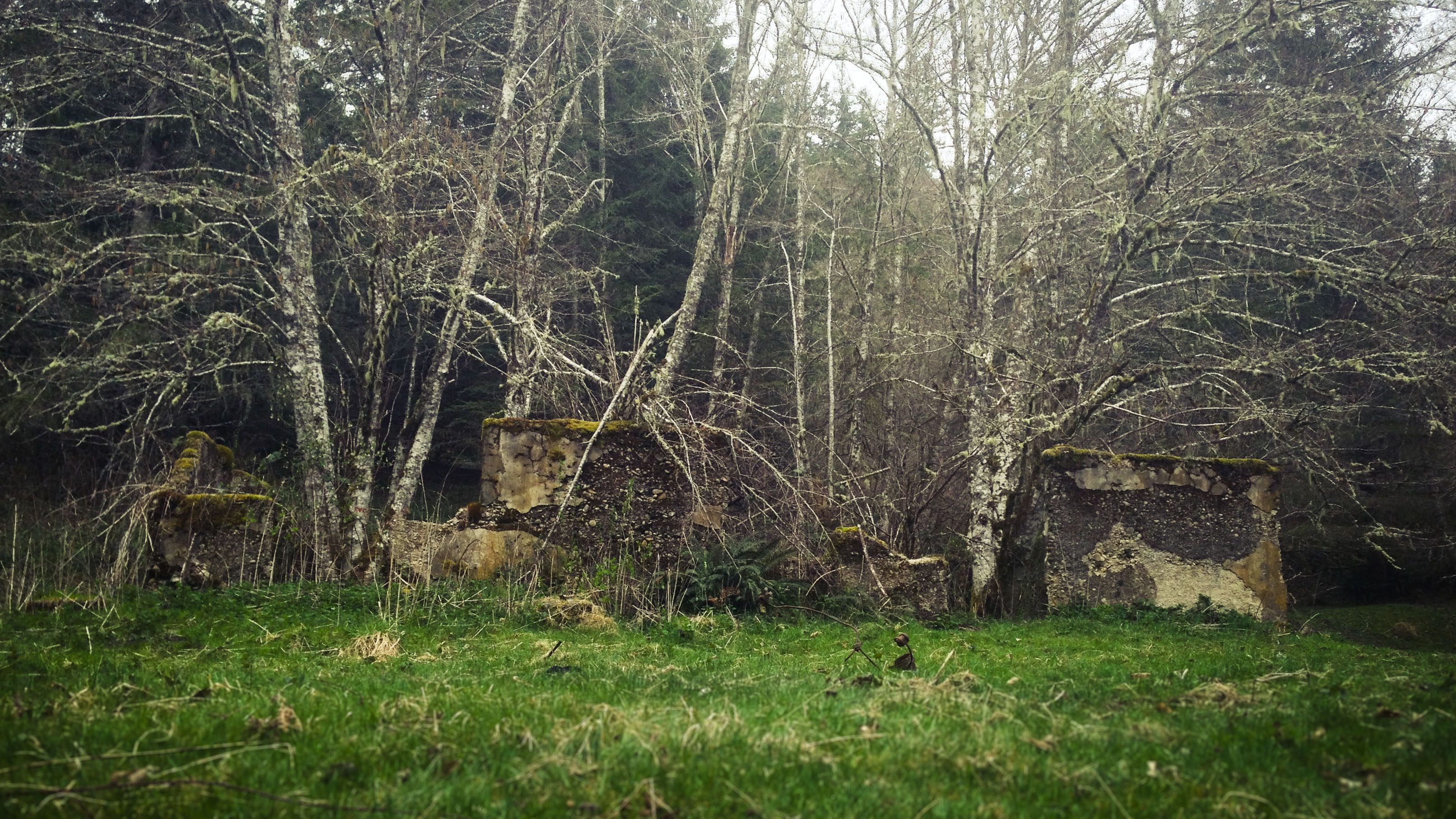 Remains of a school in the Melmont Ghost Town, Architecture, Forest, Landscape, Nature, HQ Photo