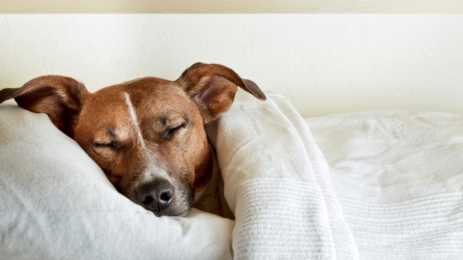 Want better sleep? Maybe let your dog in the bedroom after all