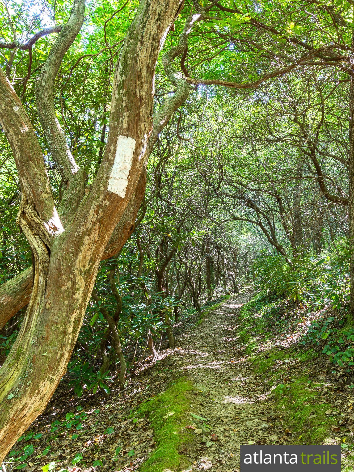 Tray Mountain: hiking the Appalachian Trail in N GA   Appalachian ...