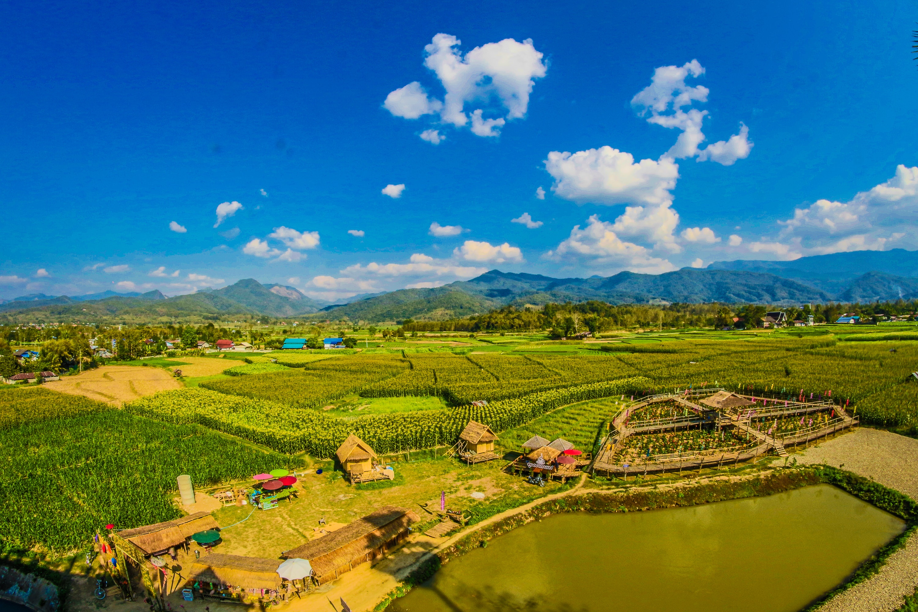 Rice field with mountain and houses during cloudy day photo