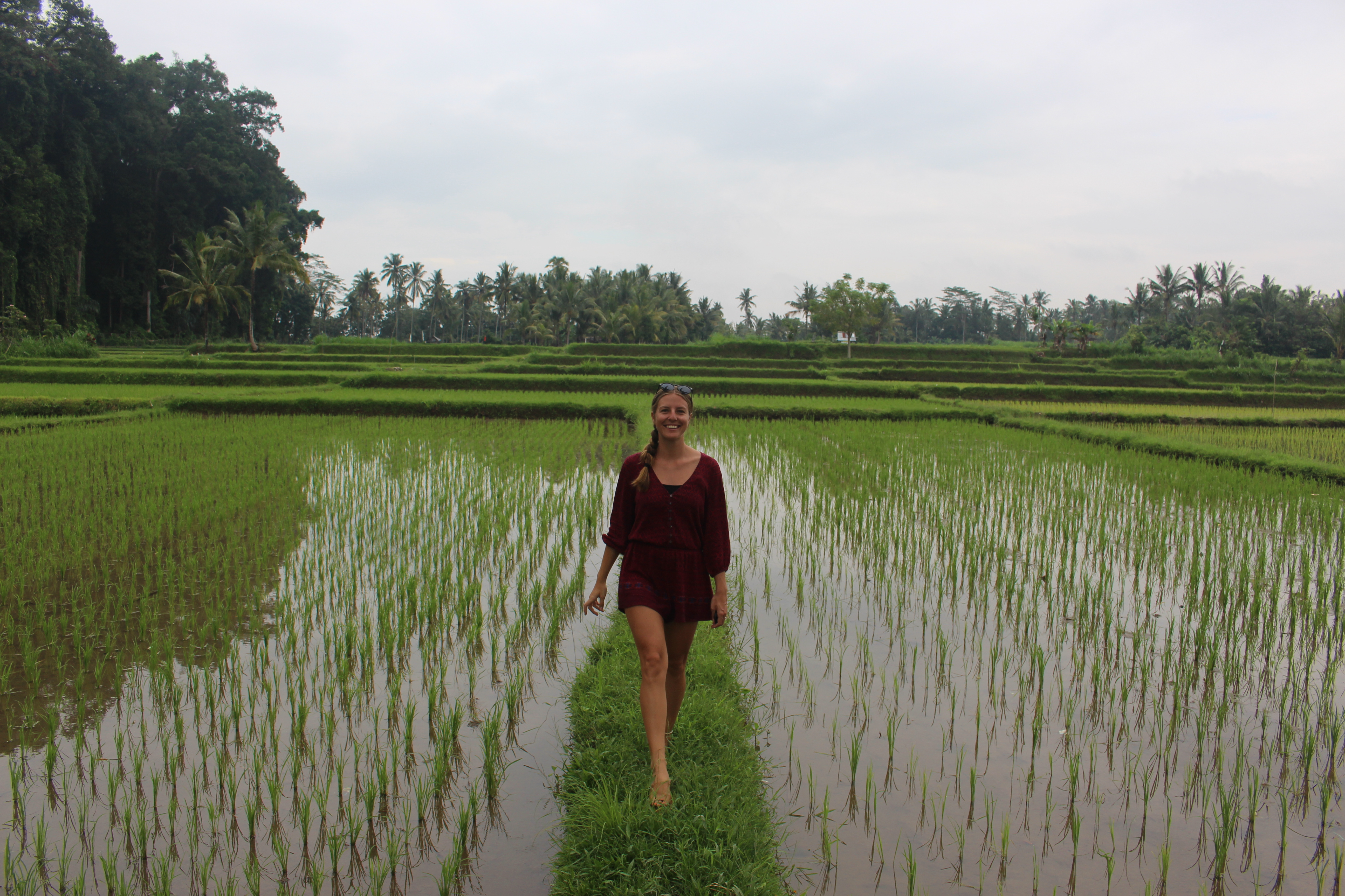 Rice Fields in Bali that you can't miss