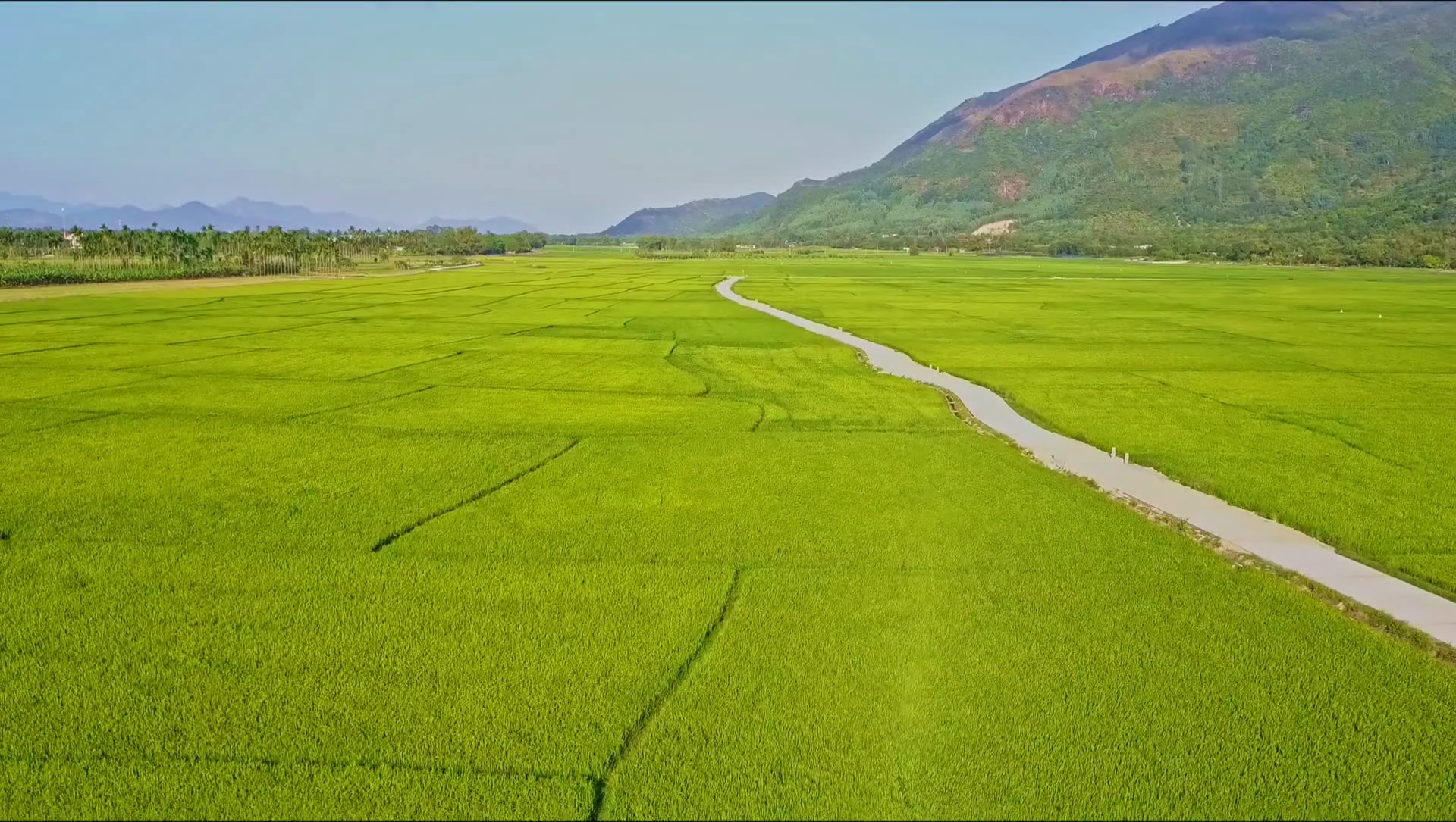 Drone Approaches Road among Rice Fields against Sky Stock Video ...
