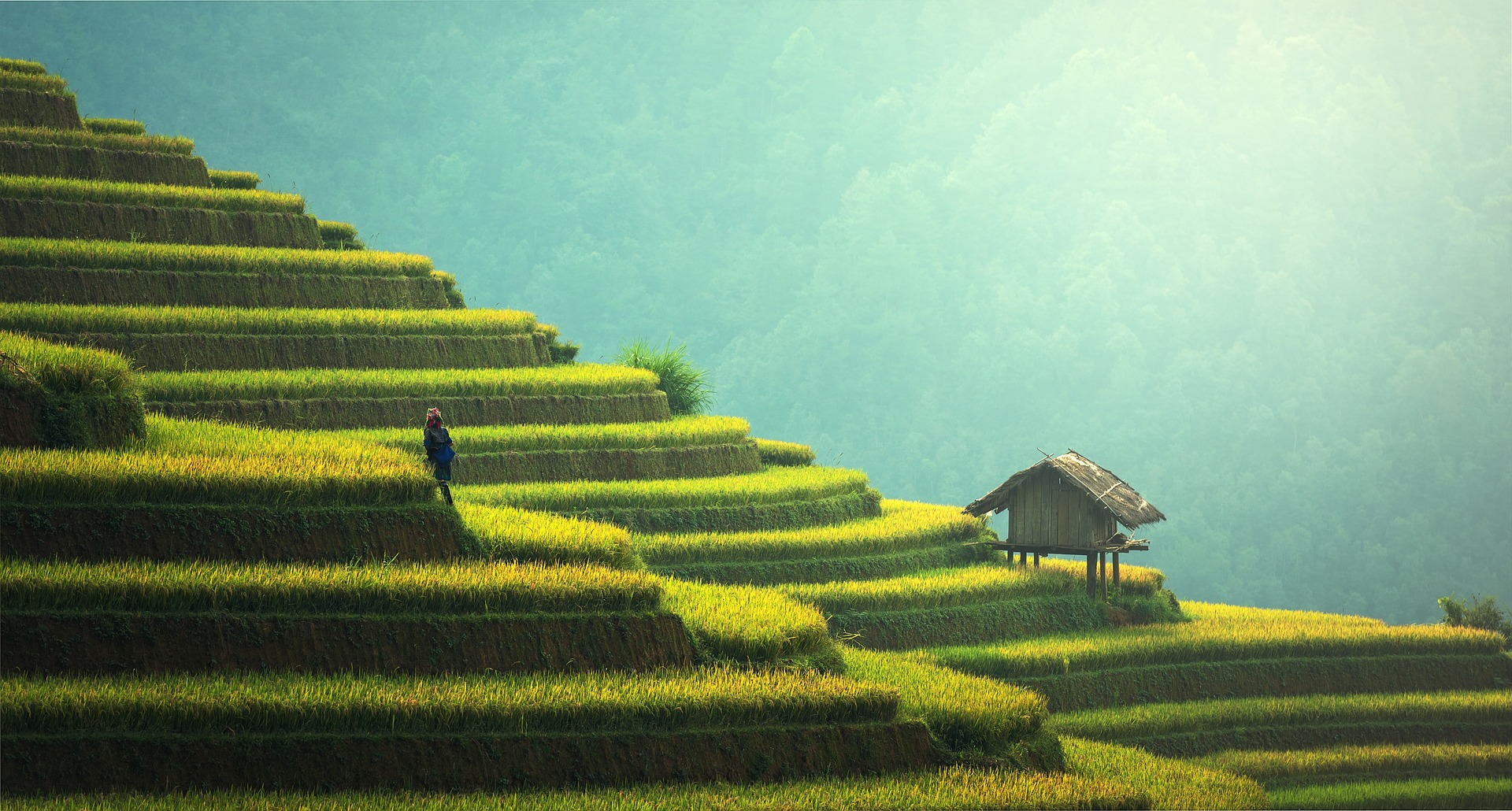 Rice plantation in asia photo