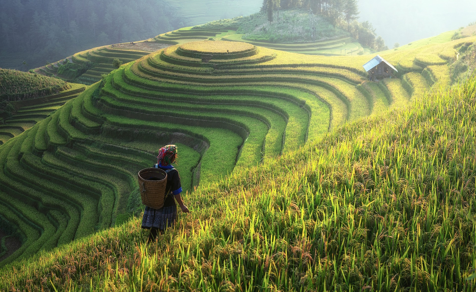 Rice plantation on the hill photo