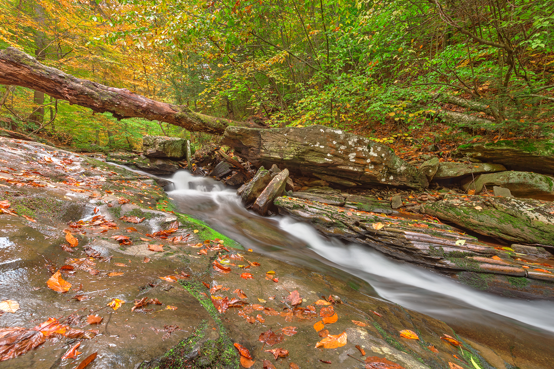 Ricketts Glen Autumn Stream - HDR, America, Park, Scenery, Scene, HQ Photo