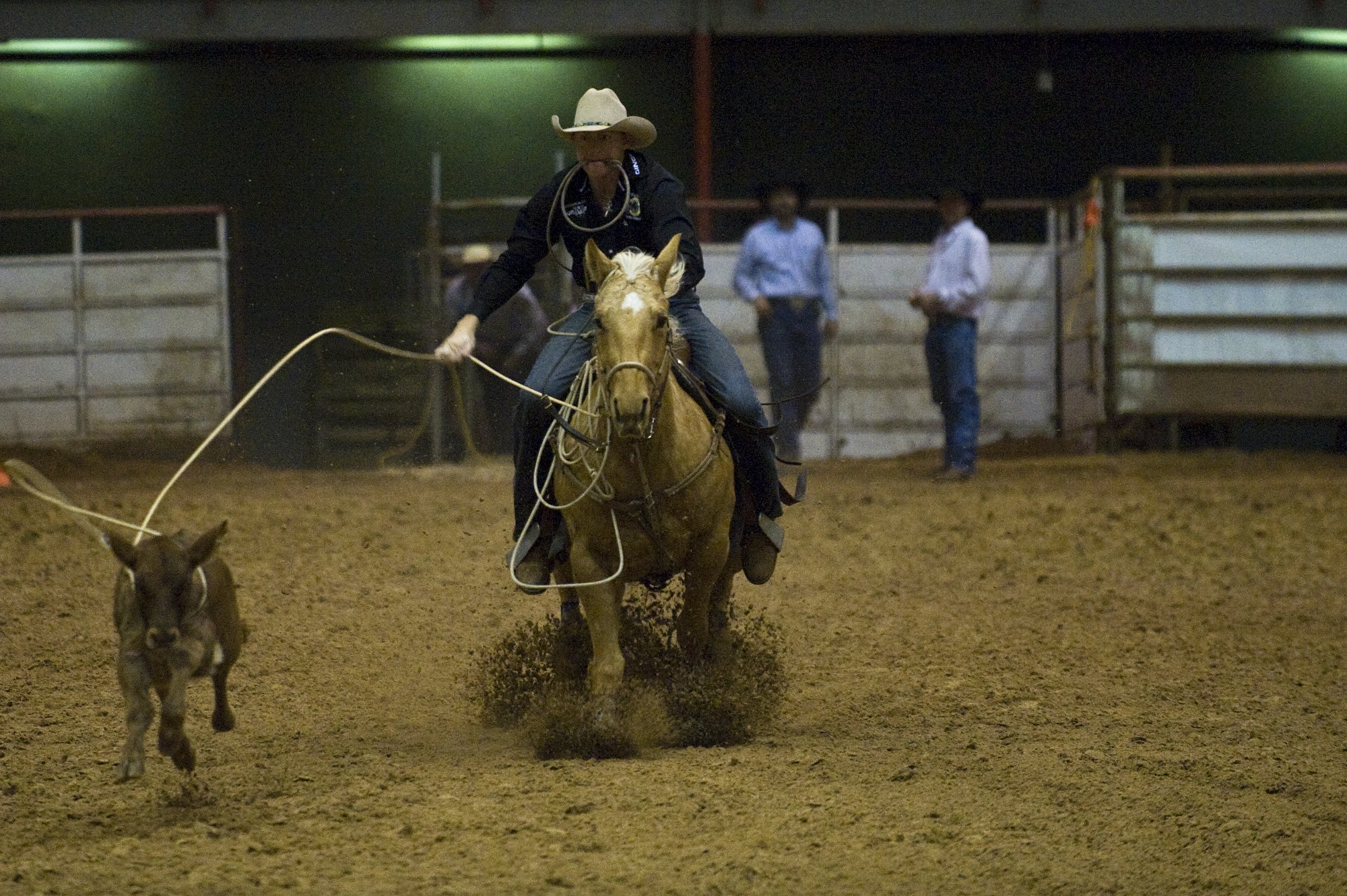 Rider in the ring photo