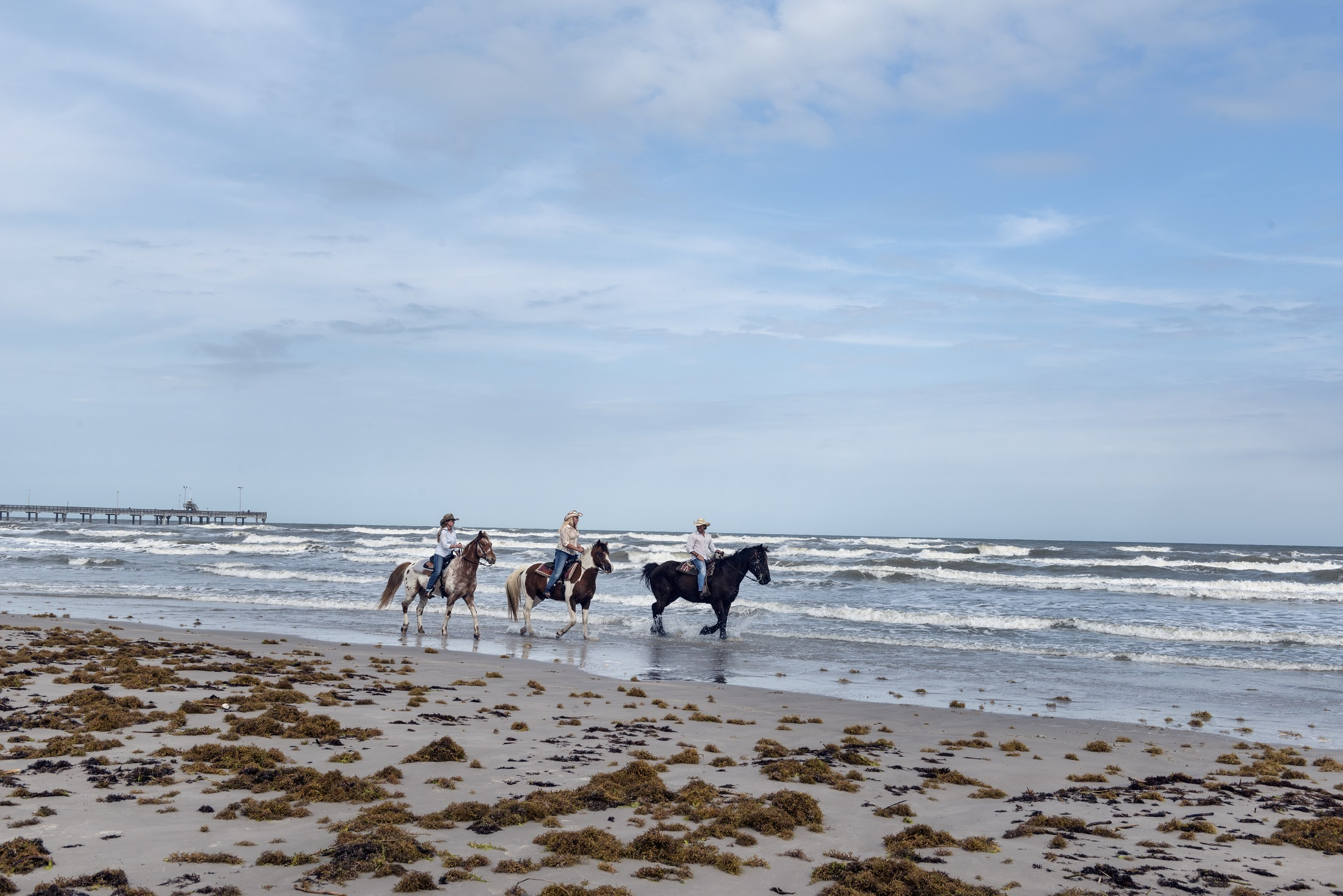 Riding on the Shore, Activity, Beach, Flow, Horse, HQ Photo