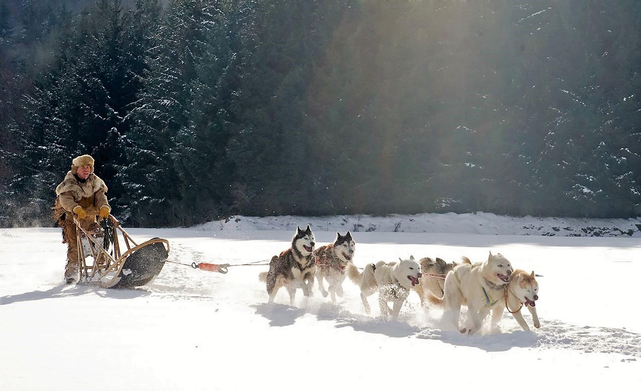 Riding wolf photo