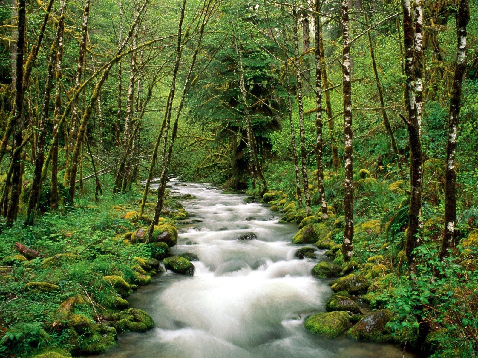 Download wallpaper 1600x1200 mountain river, trees, wood, green ...