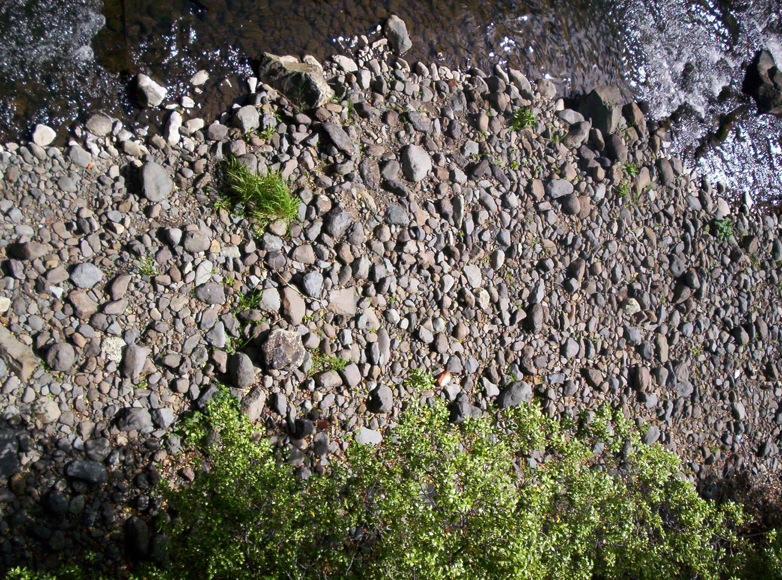River Bed Textures, Bspo06, Grass, Green, Moving, HQ Photo