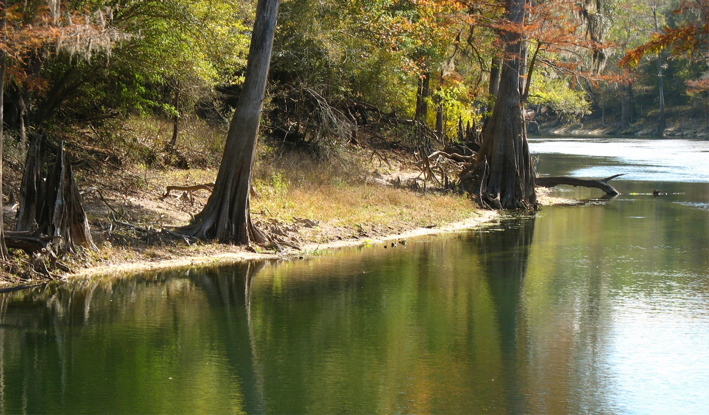 River Going Down To Gulf, Beautiful, Bspo06, Florida, Green, HQ Photo
