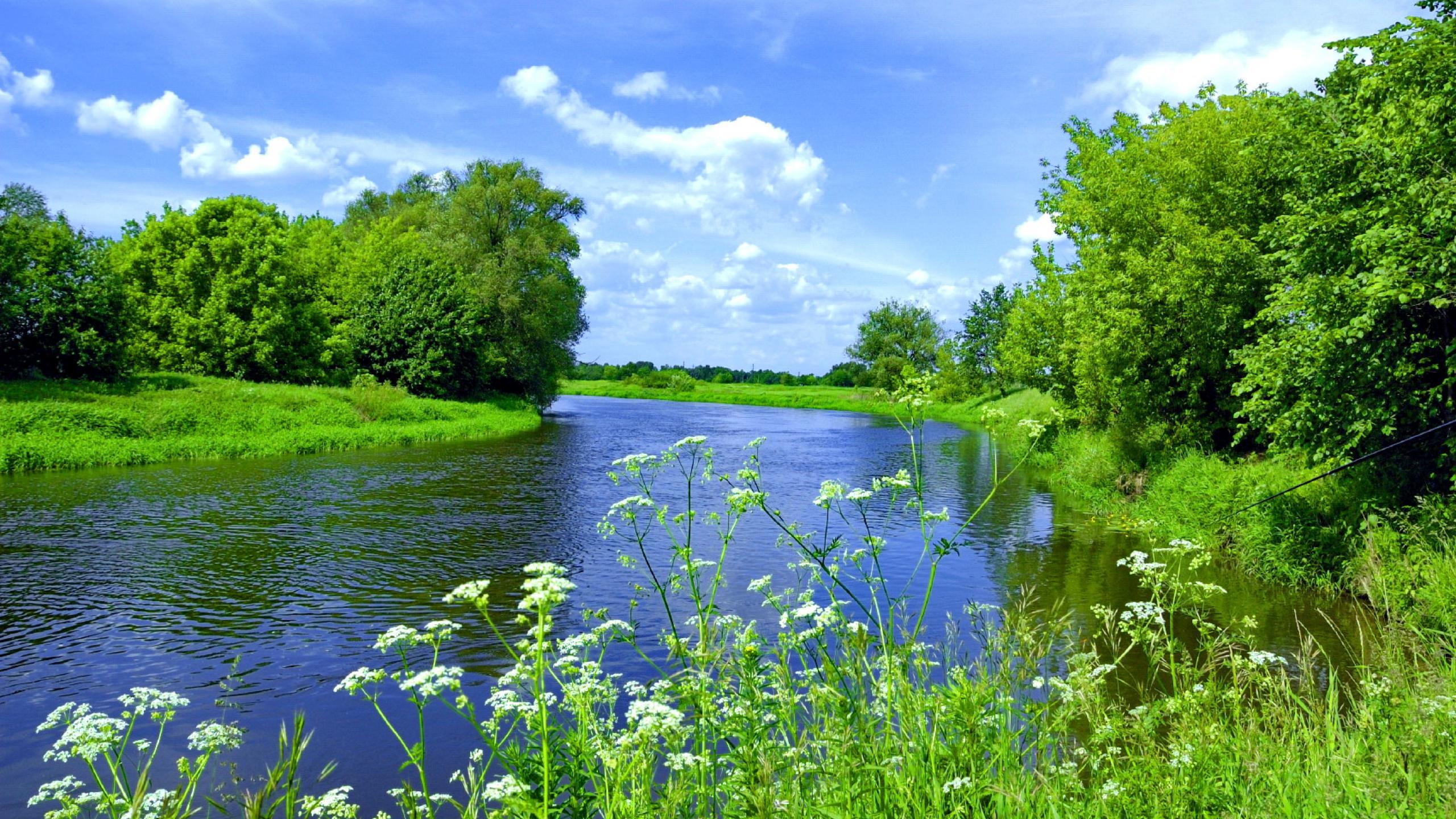 River Scene Clouds Stream Calm Nature Grass 2560x1440 Hd Wallpaper ...